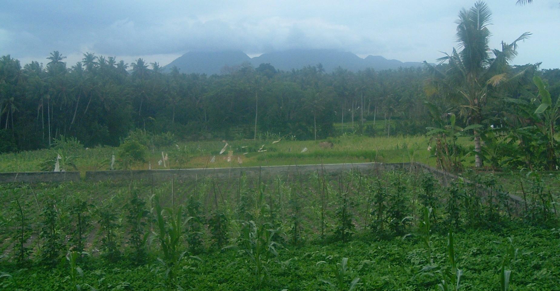 bali countryside2.JPG