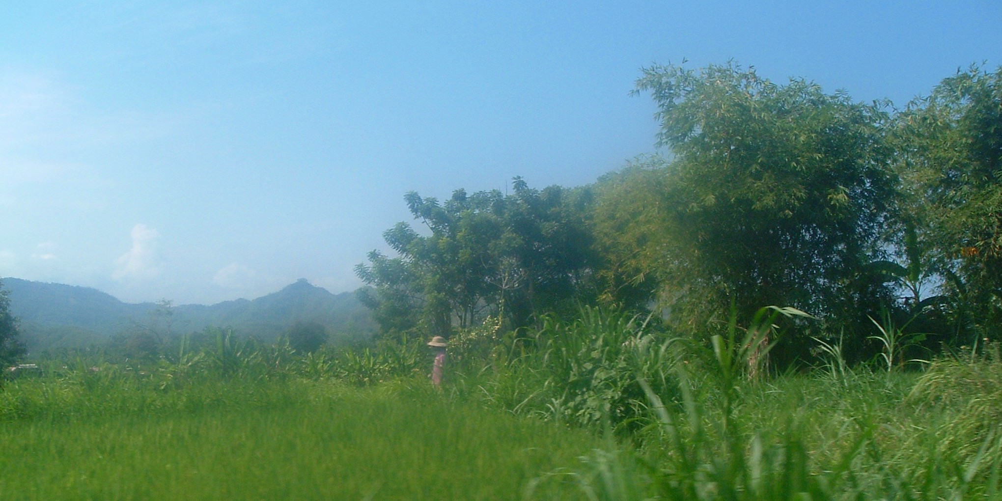 bali ricefield.JPG