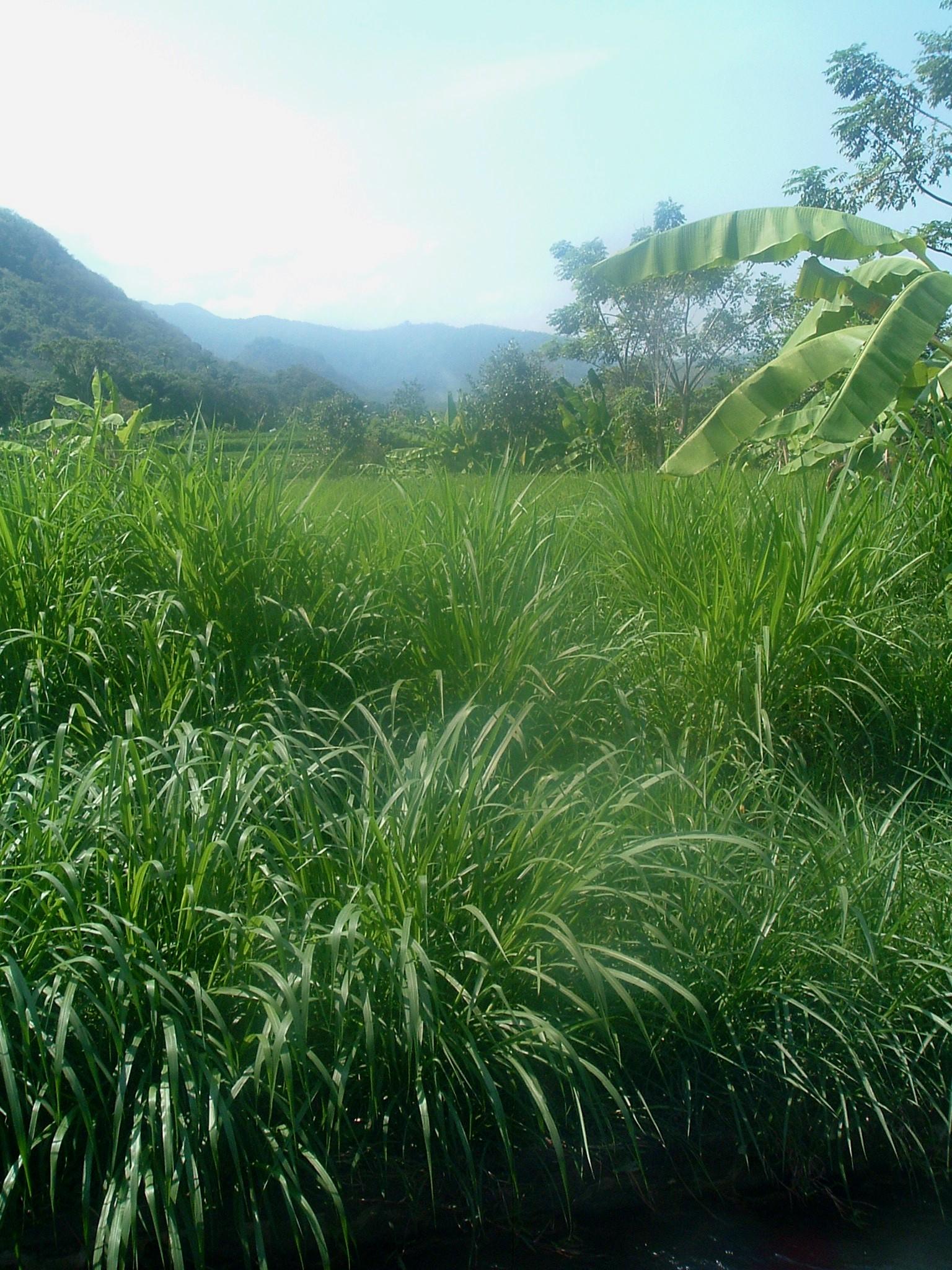 green bali 2.JPG