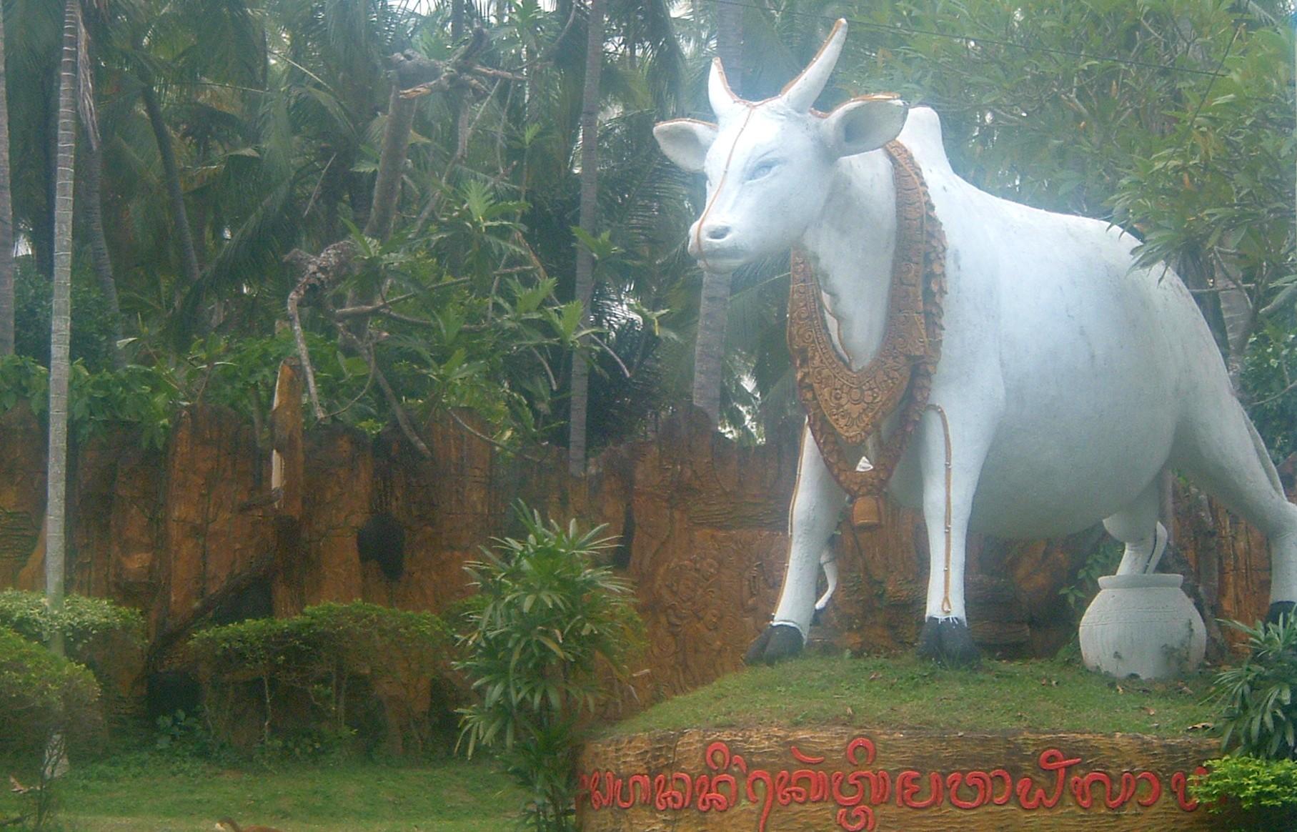 bali cow.JPG