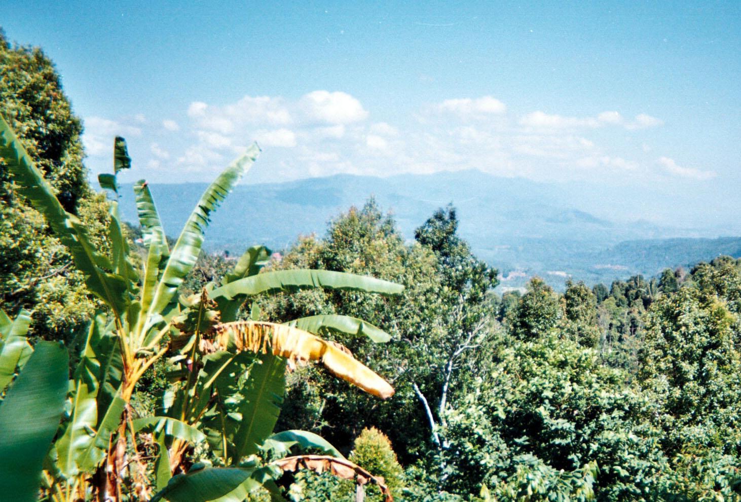 Central Bali Mountains.jpg