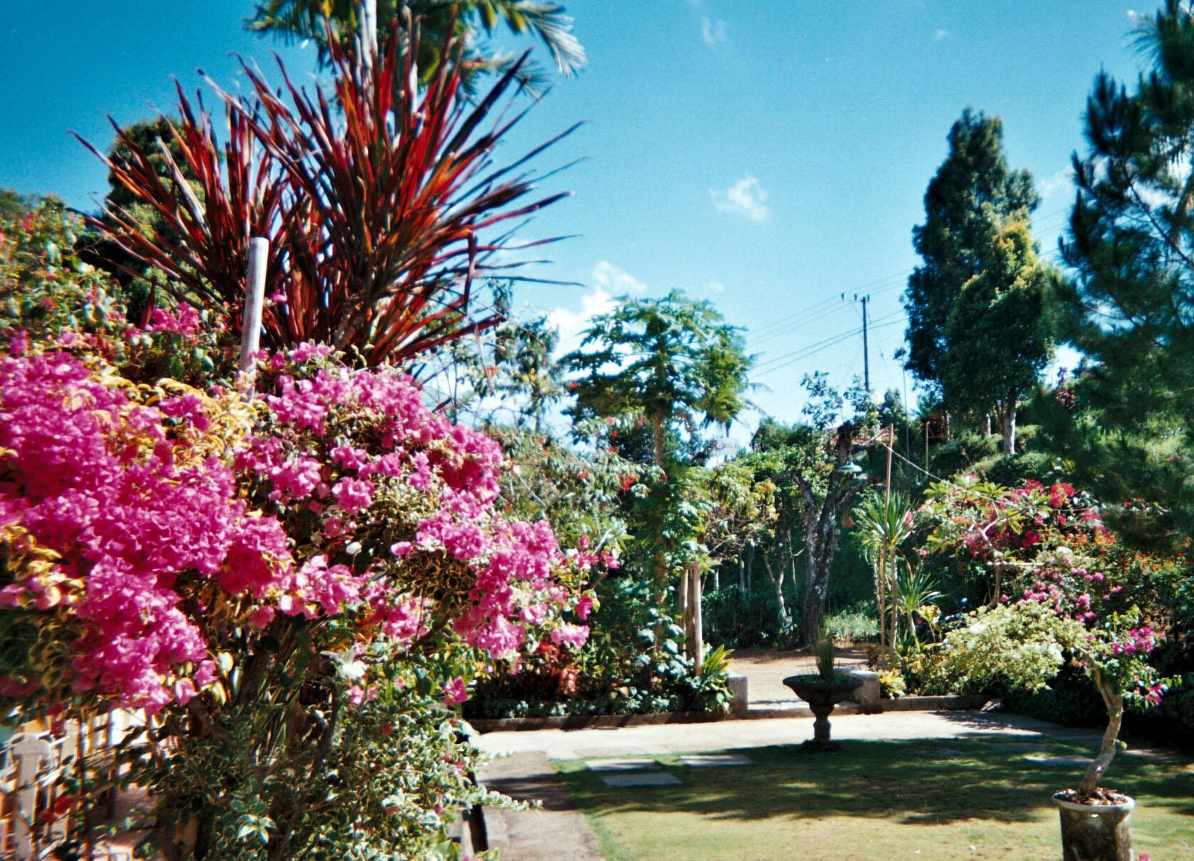 Balinese garden.jpg