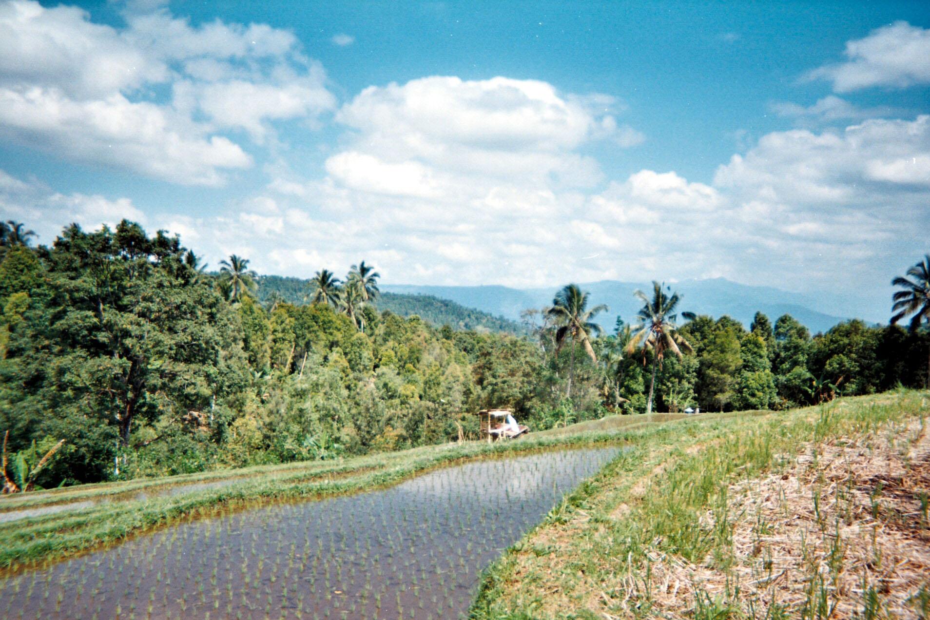 Munduk rice terraces.jpg