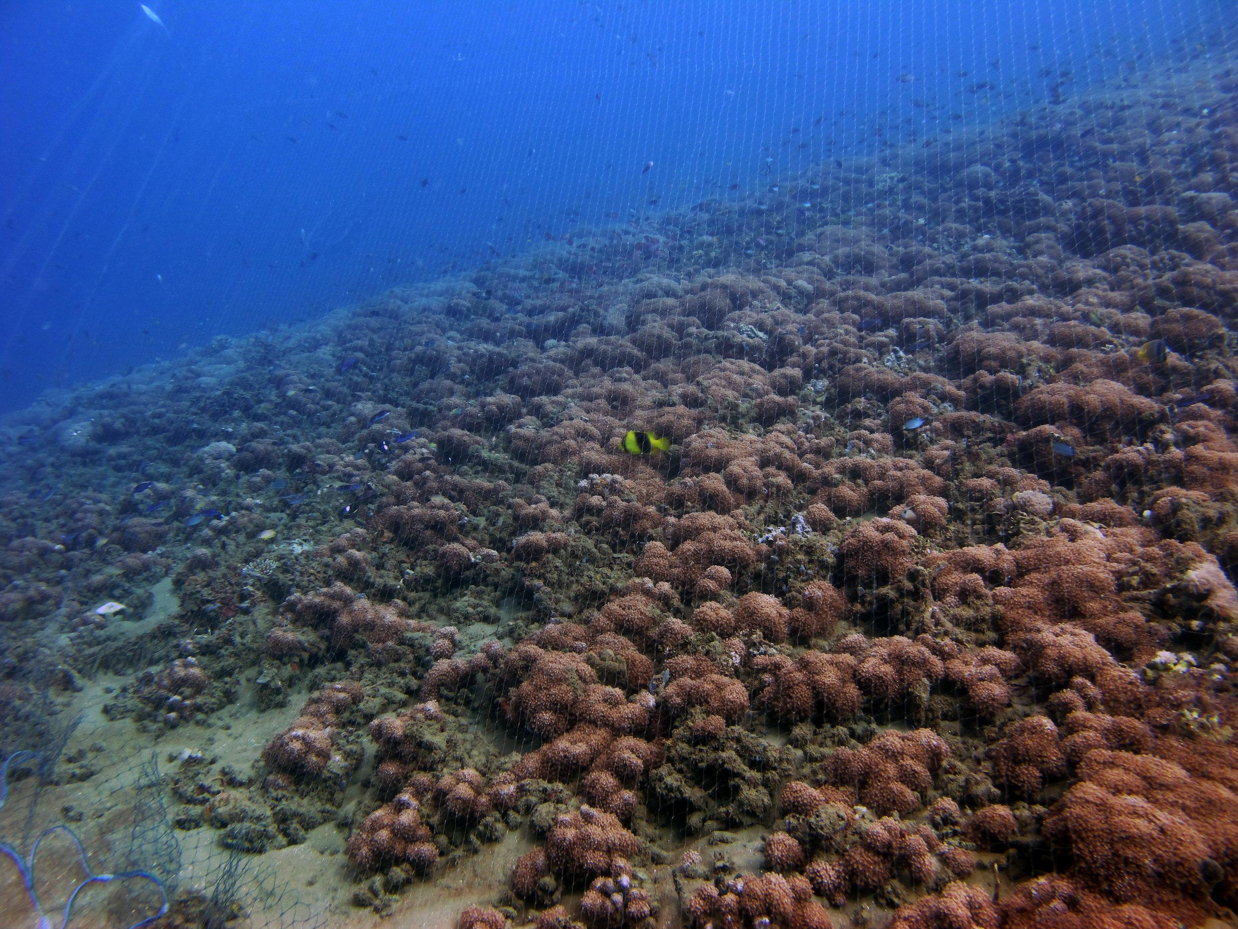 diving in a fishing net.jpg