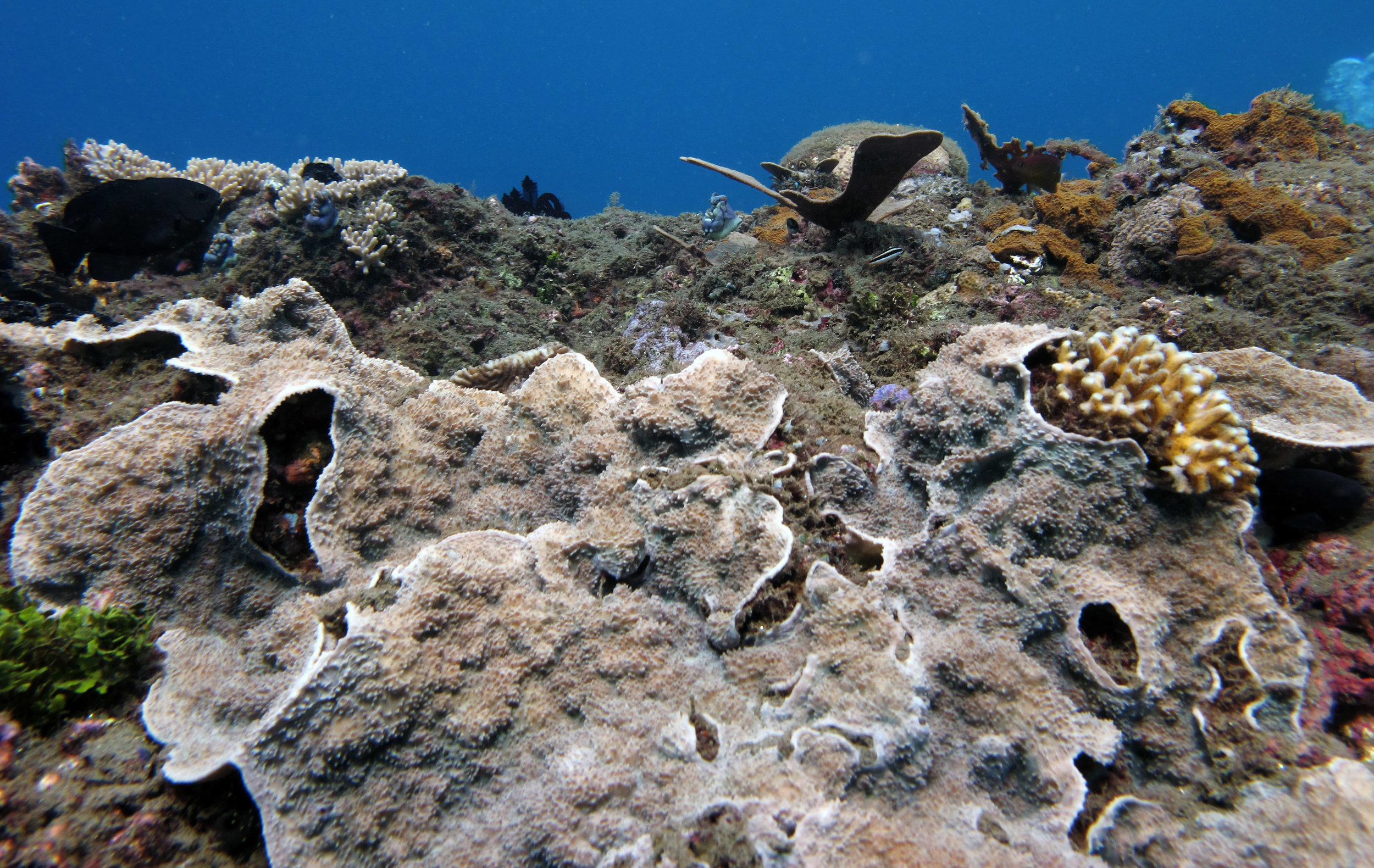 encrusting coral.jpg