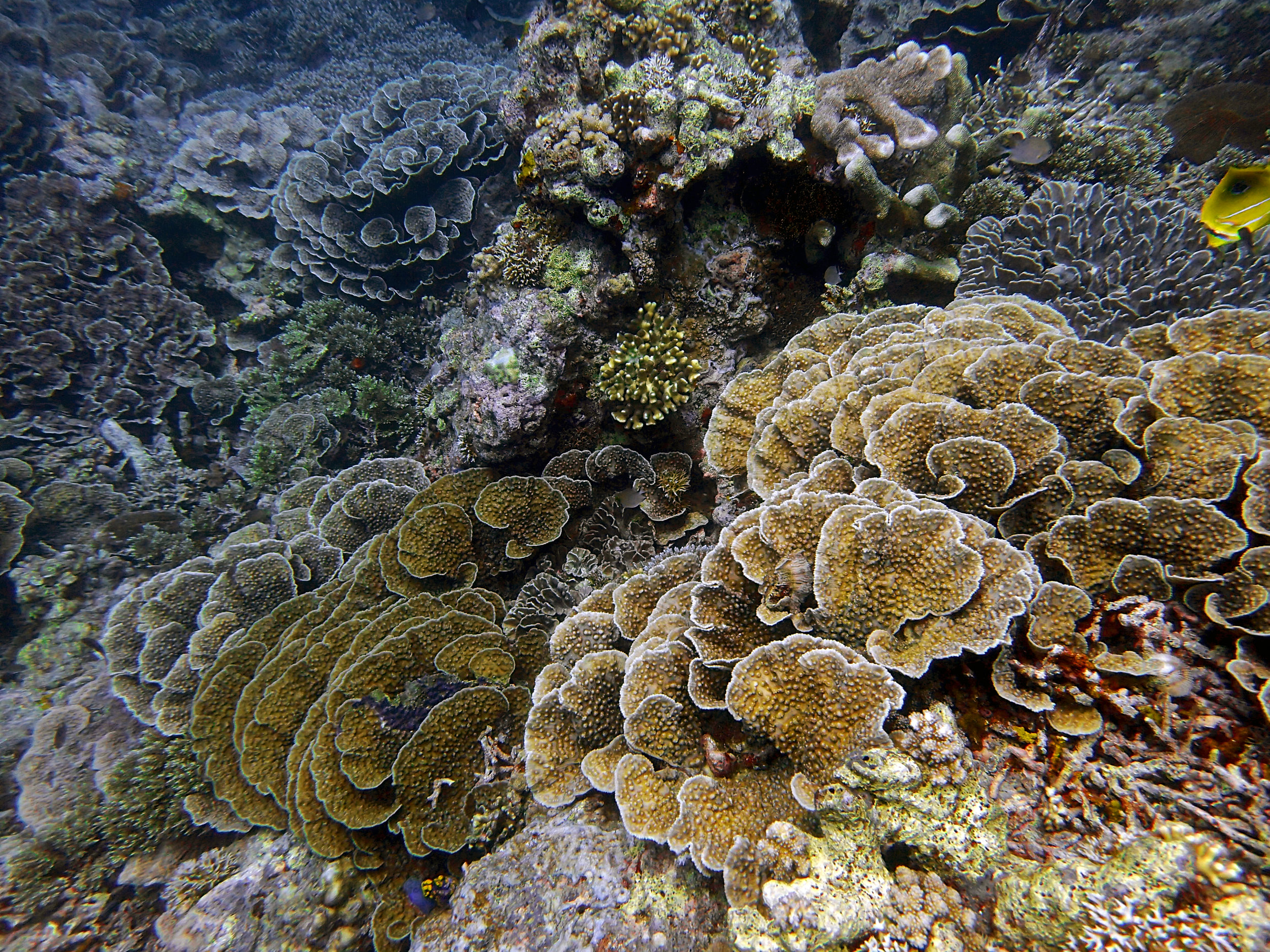 Lava Flow Maluku.jpg