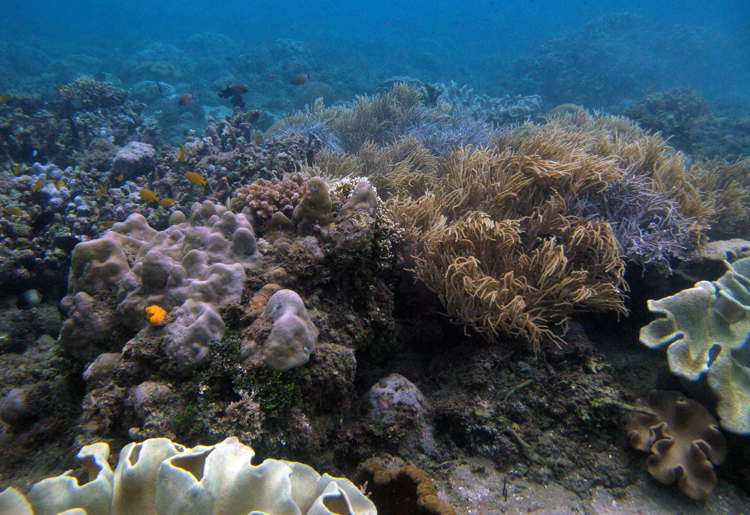 Ambon Bay.jpg