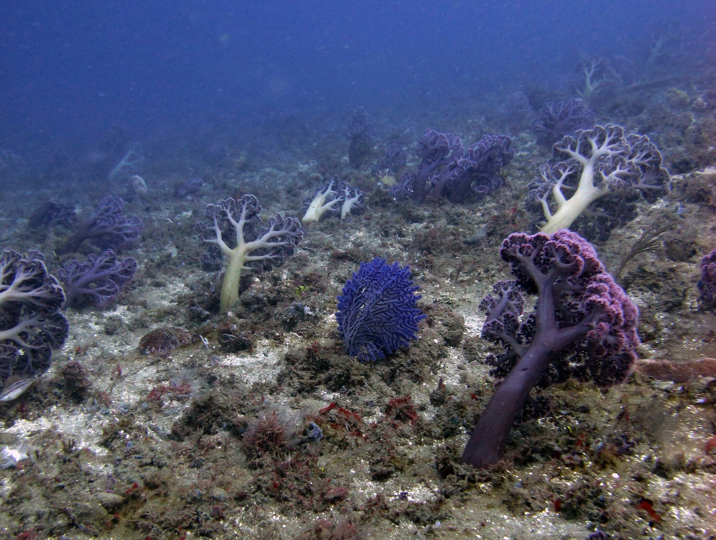 soft corals in the muck.jpg
