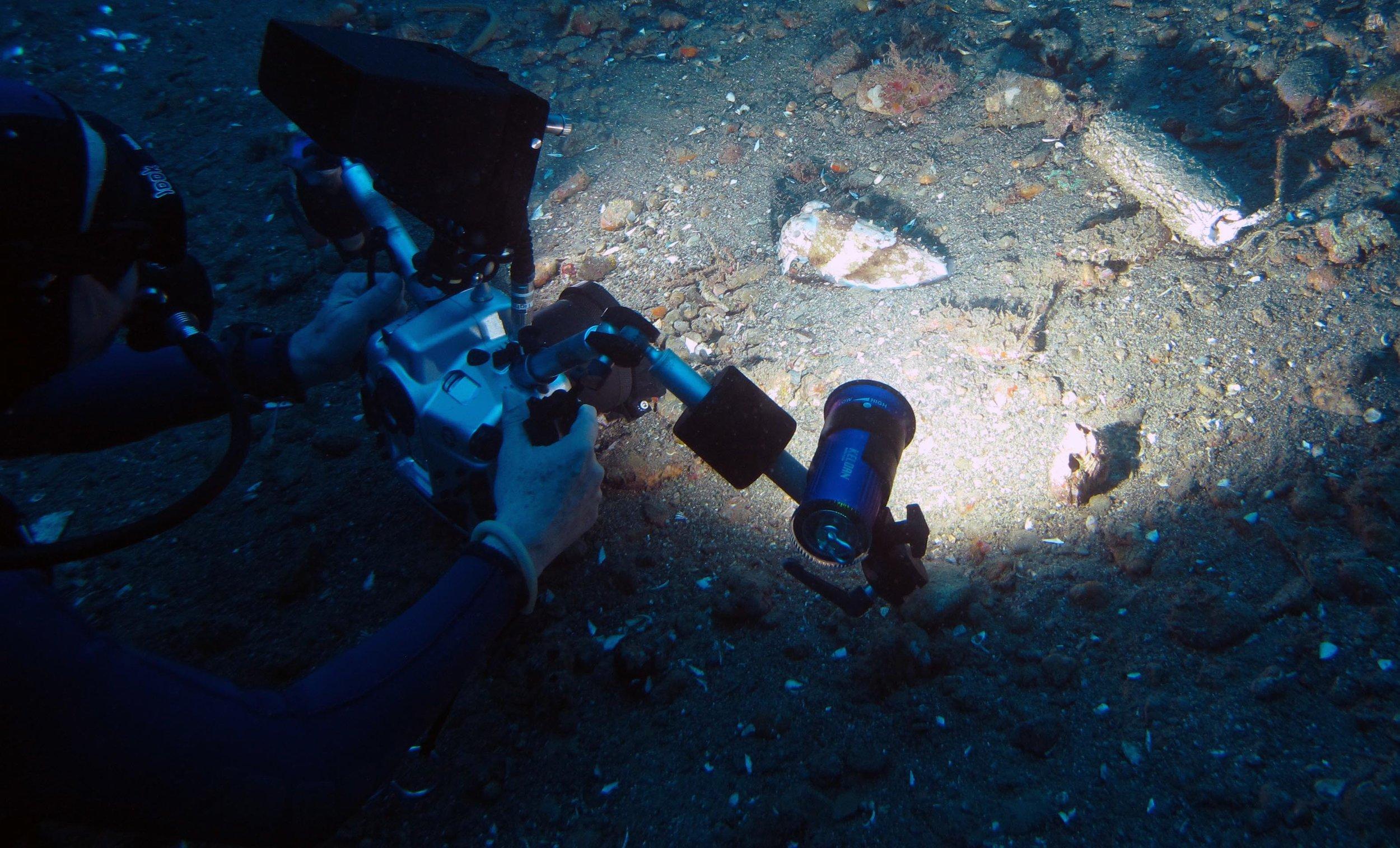 blinding a cuttlefish.jpg