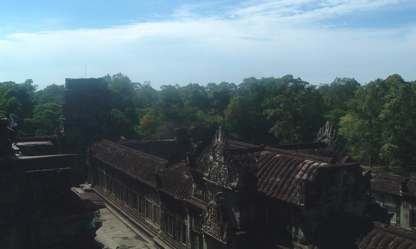 angkor forest.JPG