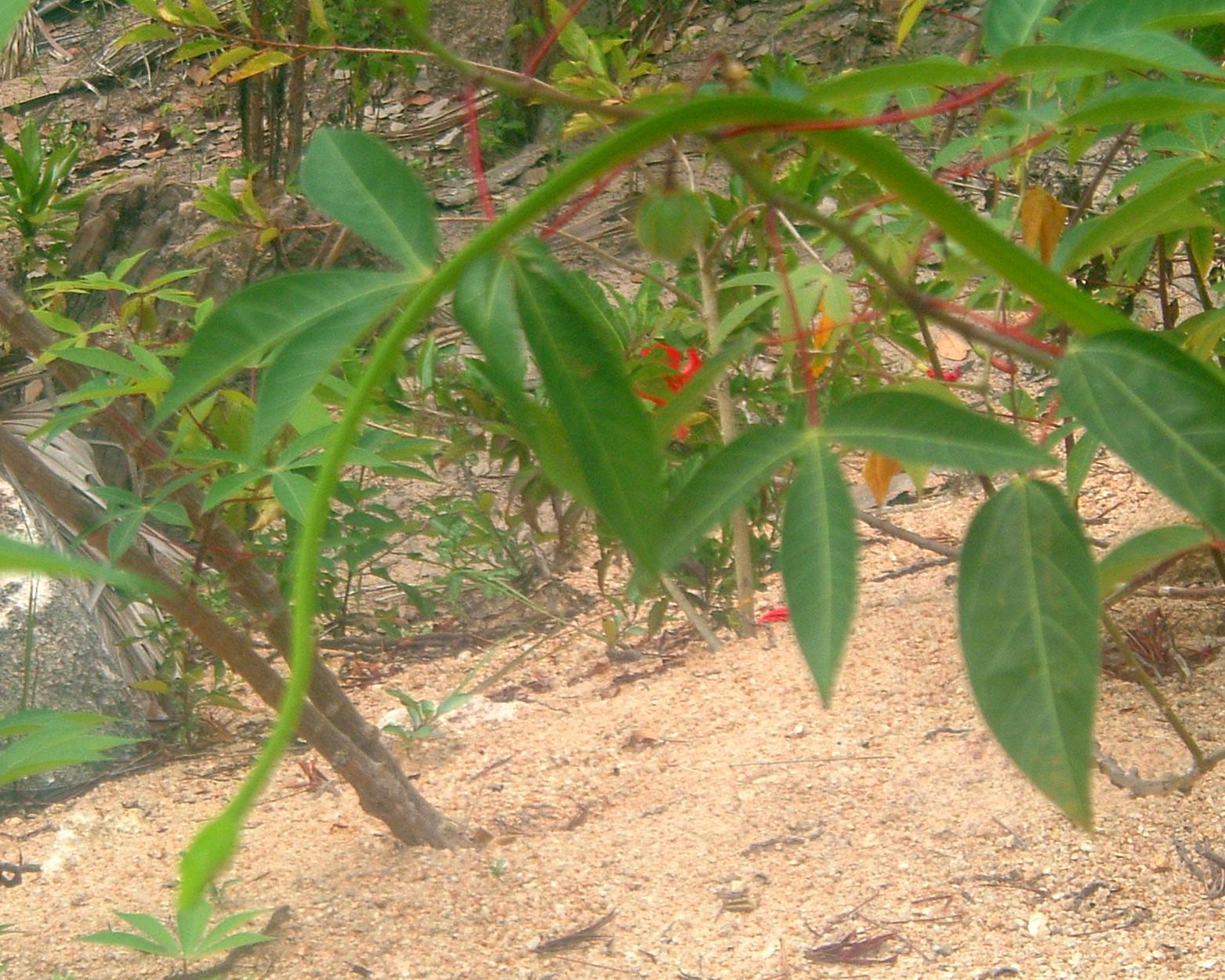 green tree snake.JPG