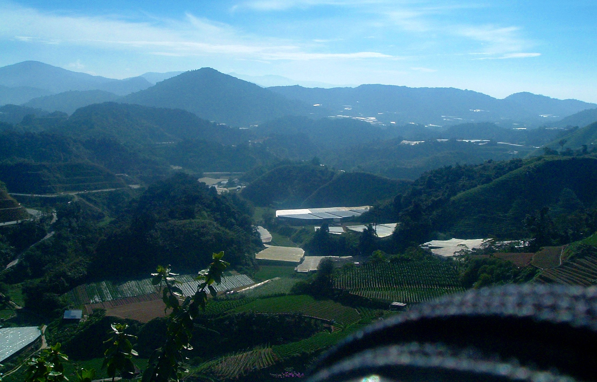 cameron highlands 2.JPG