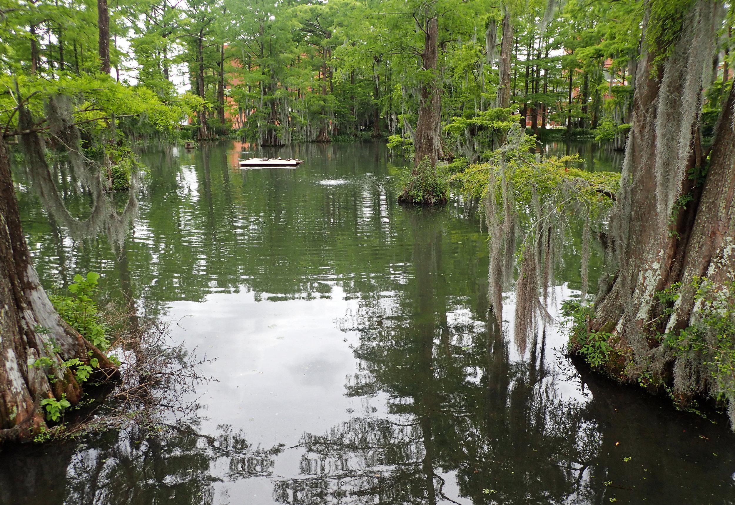 campus swamp.jpg
