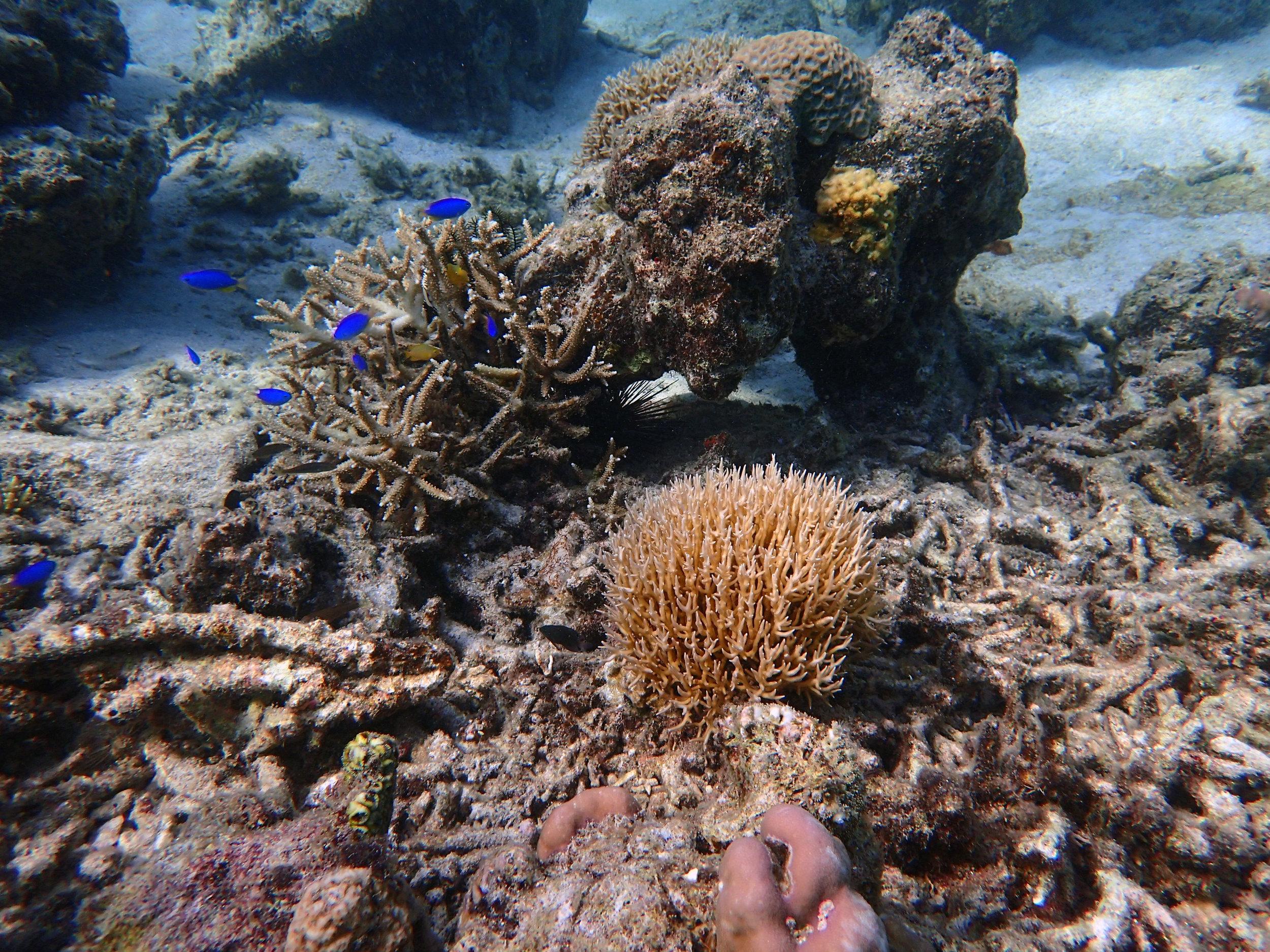 SH Sulawesi.jpg