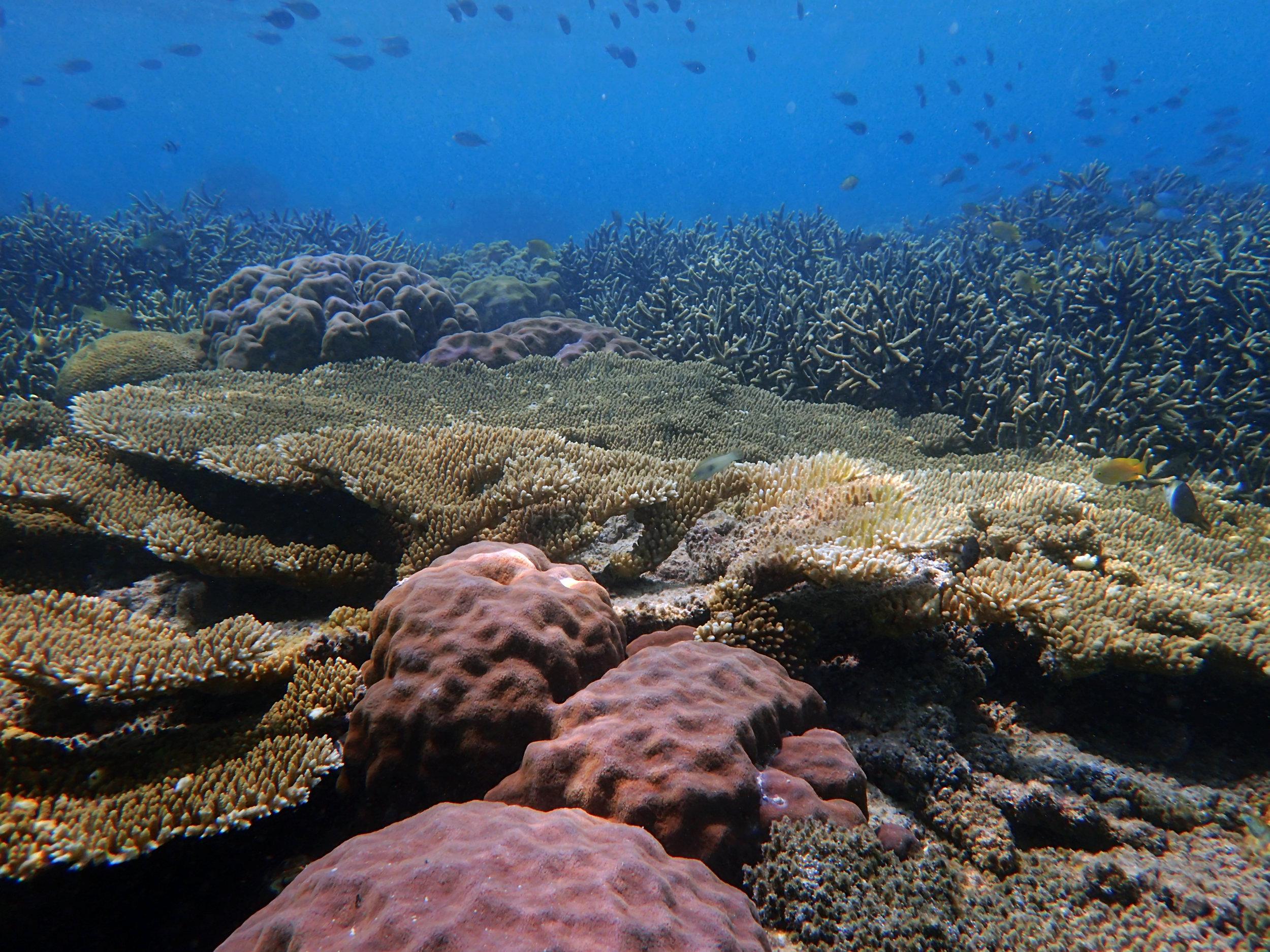 great Keke Island coral shot.jpg