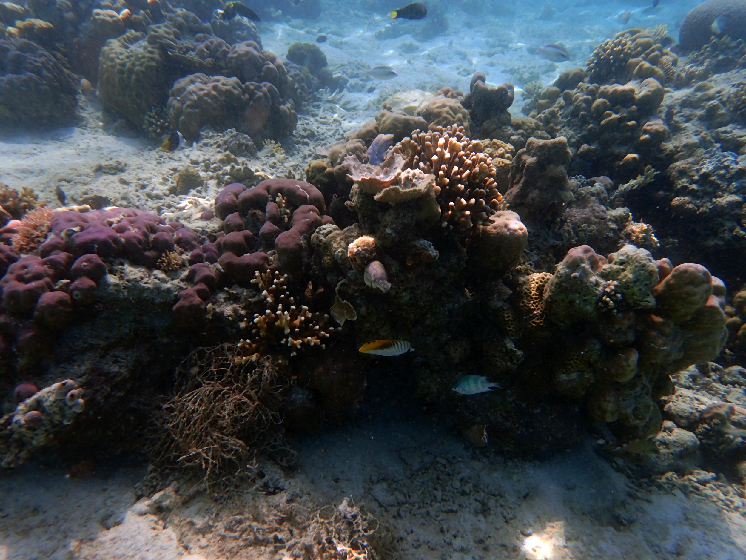 corals at 1-2 m.jpg