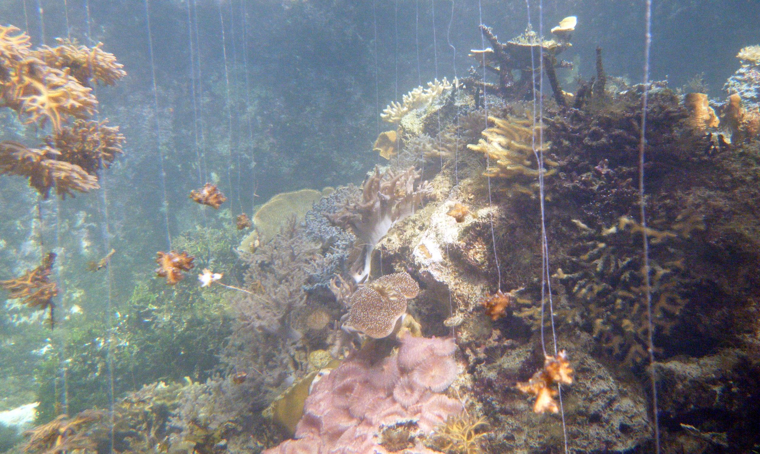 batfish recovery tank.jpg