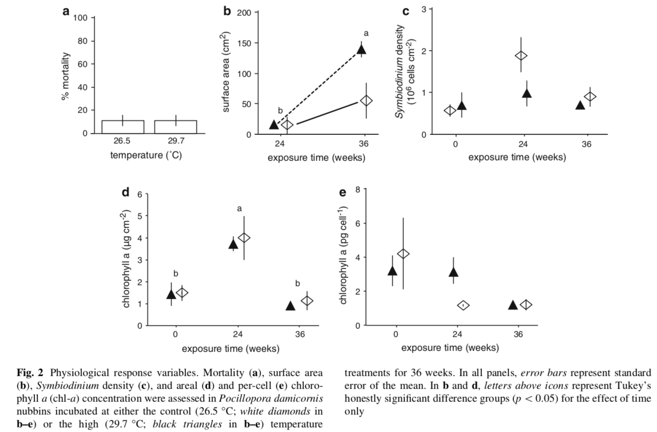 Nubbins were not buoyantly weighed since the process takes so long (and therefore cellular biology could be disturbed). Instead, surface area was used as a proxy for growth. High-temperature nubbins, in fact, grew more than controls by the end of the experiment, though this difference was not statistically significant.