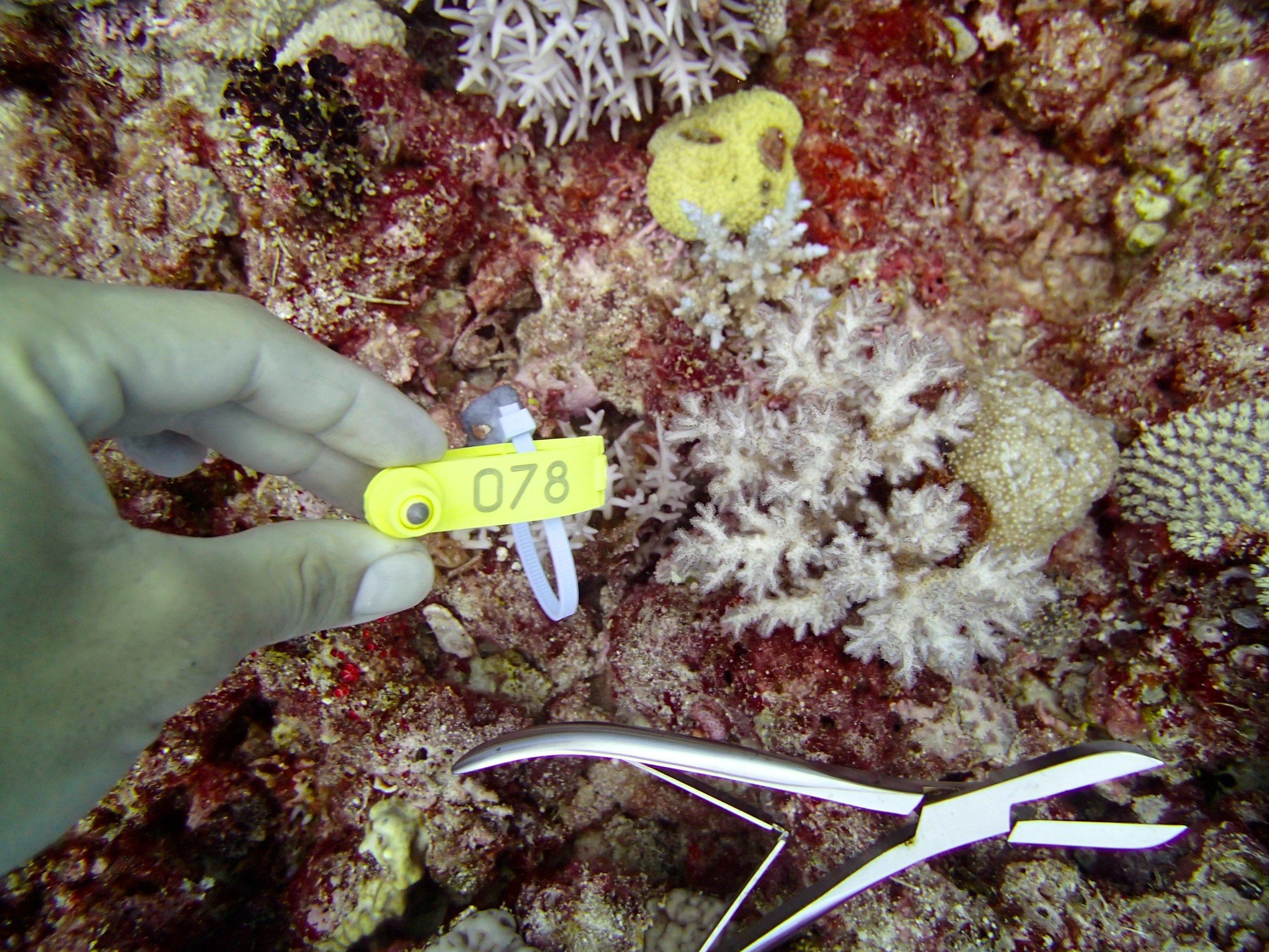 NC colony 70, 19 meters, 09-12.jpg