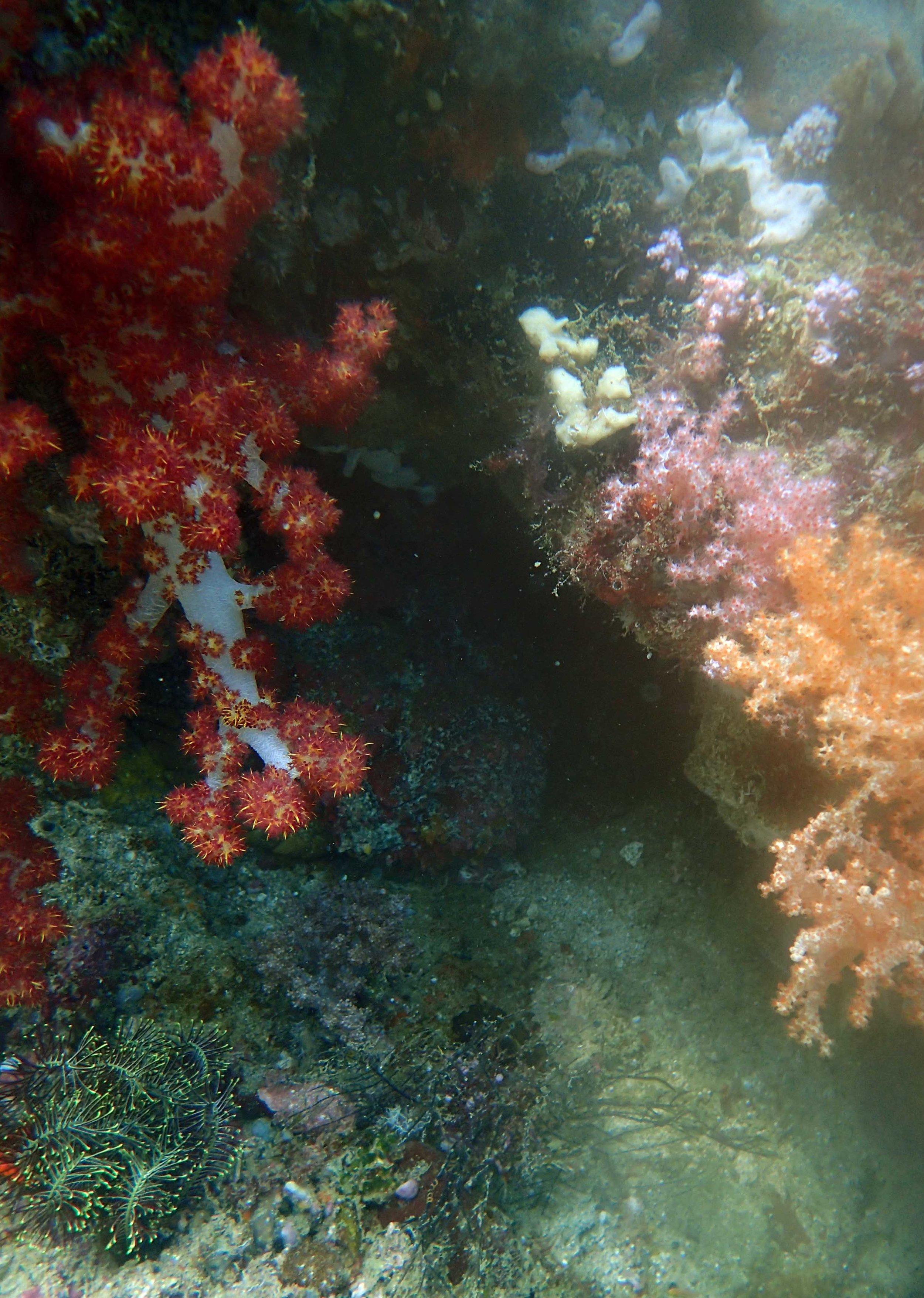 stone fish.jpg