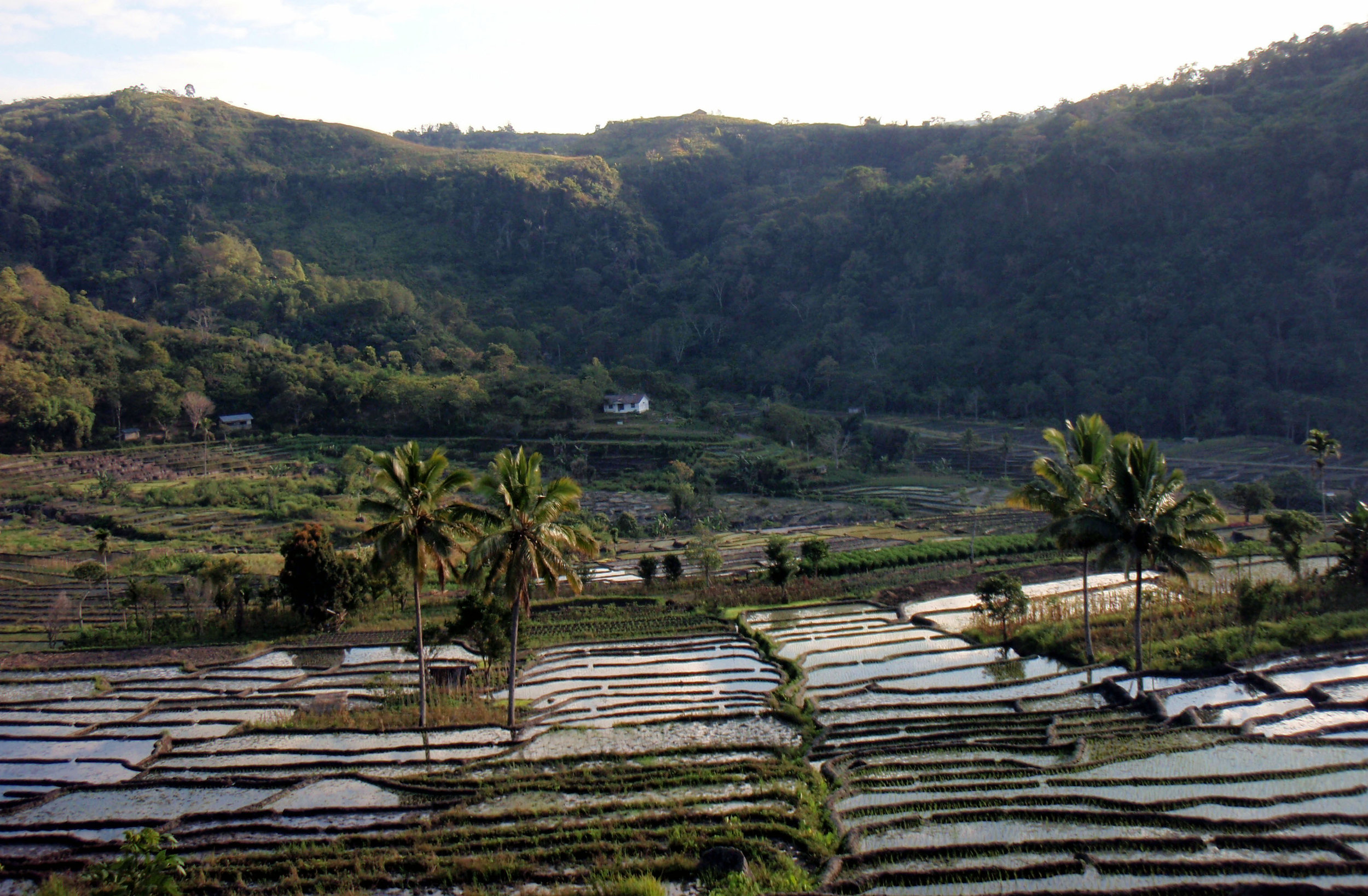Moni rice terraces.jpg