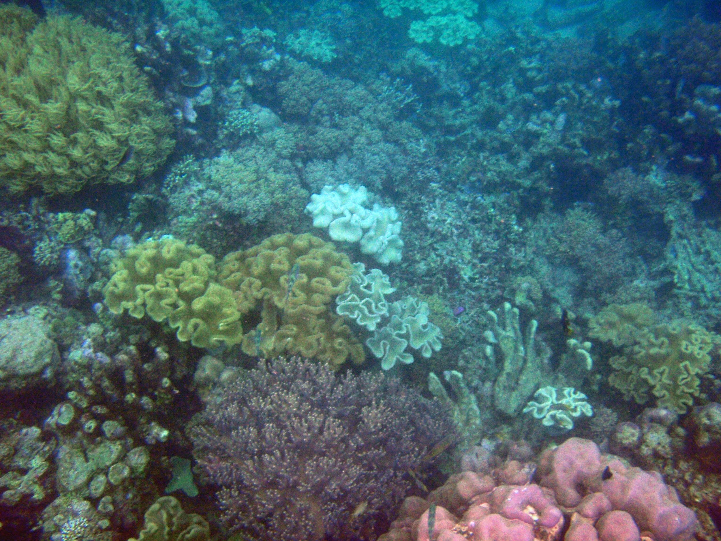 Riung seascape.jpg