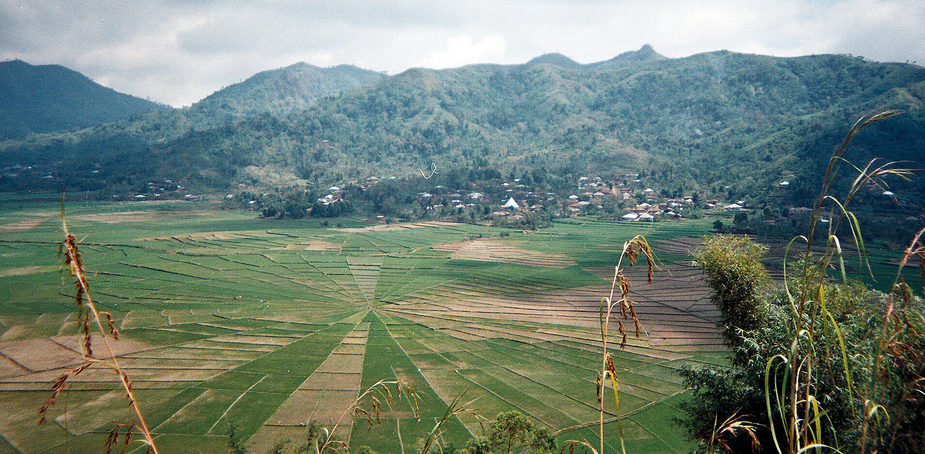 spiderweb rice terrace.jpg