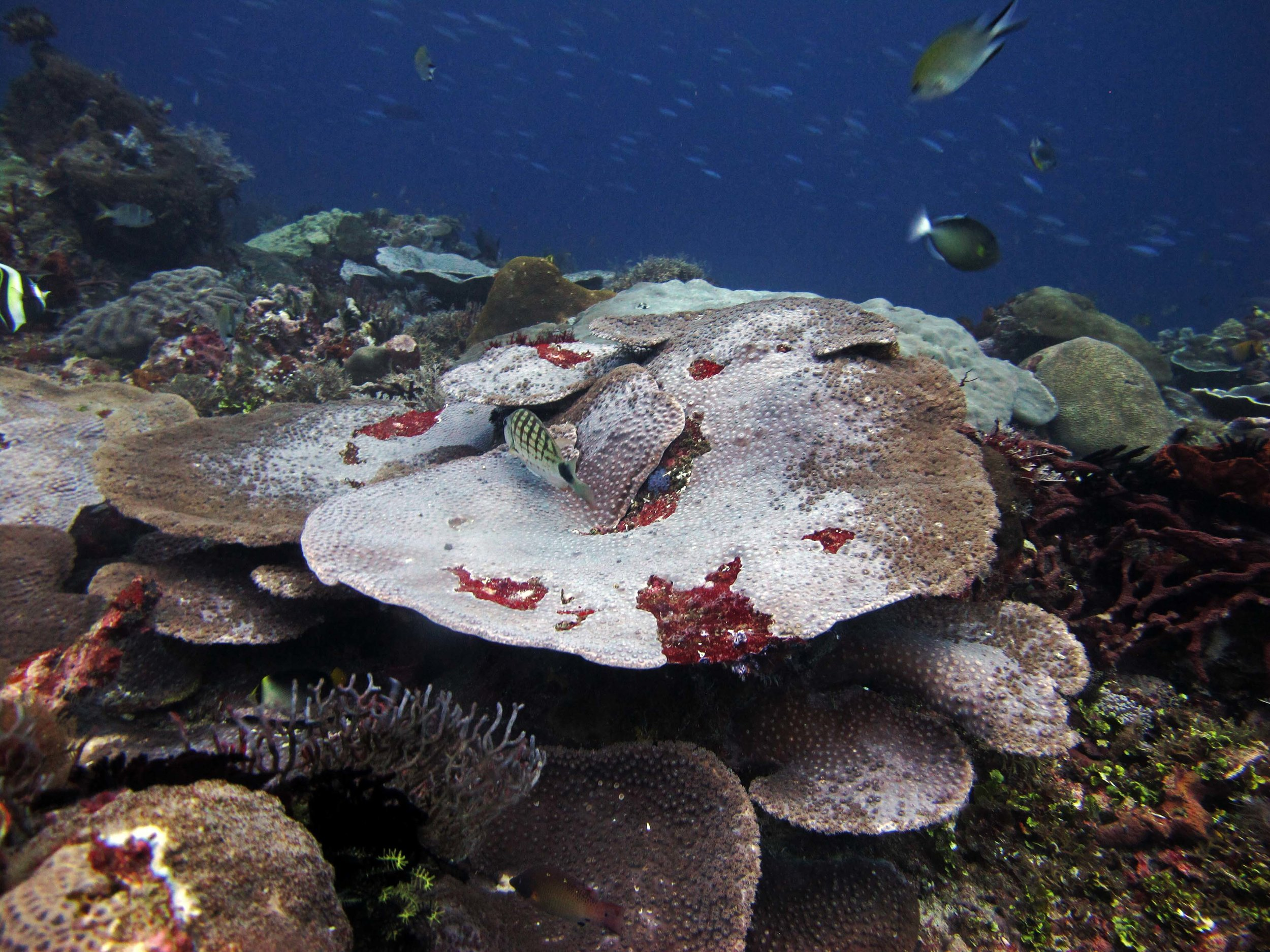 disease in Raja Ampat?.jpg