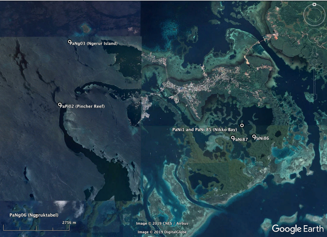 Pincher Reef is located to the left of the map. High-resolution habitat maps will be placed on the Living Oceans Foundation's excellent mapping  site  in late 2019.