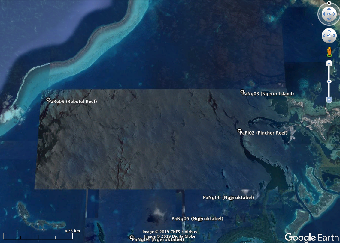 "Rebotel Reef (PaRe09). Please note that GPS coordinates for all sites can be found on the "" Palau overview "" page."