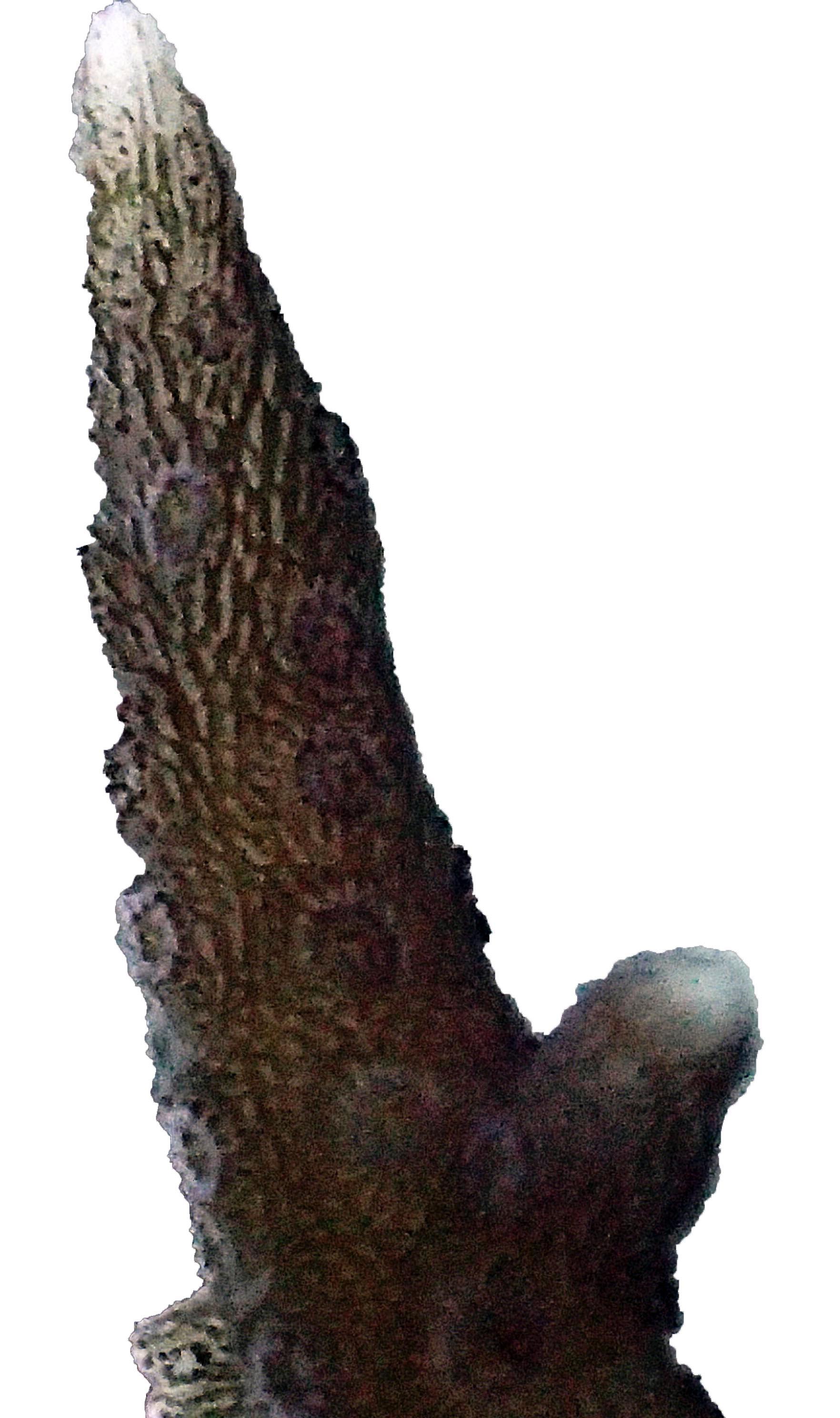 P1171731.jpg