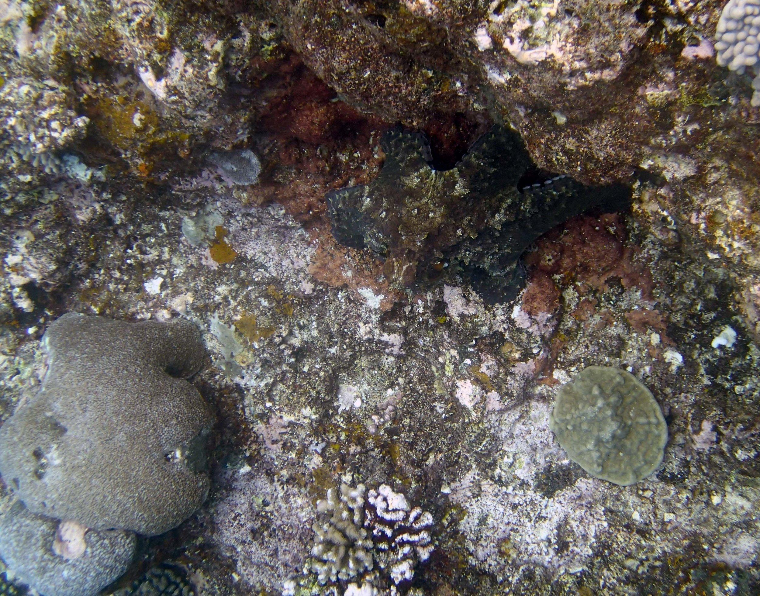octopus 3.jpg