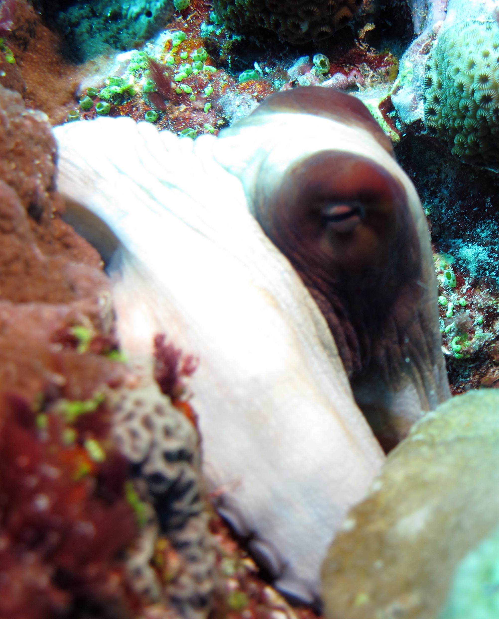 octopus macro.jpg