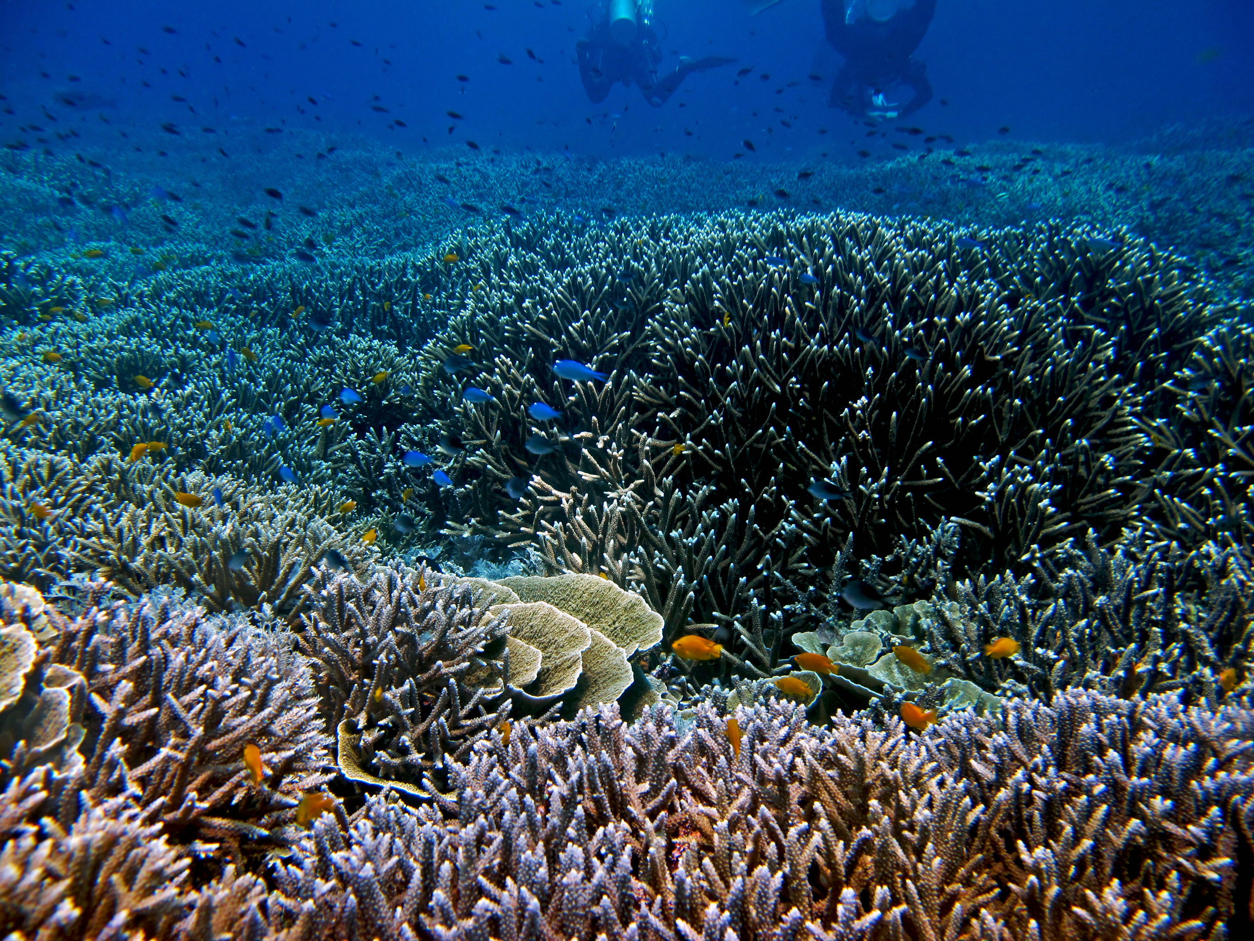 more from Raja Ampat.jpg