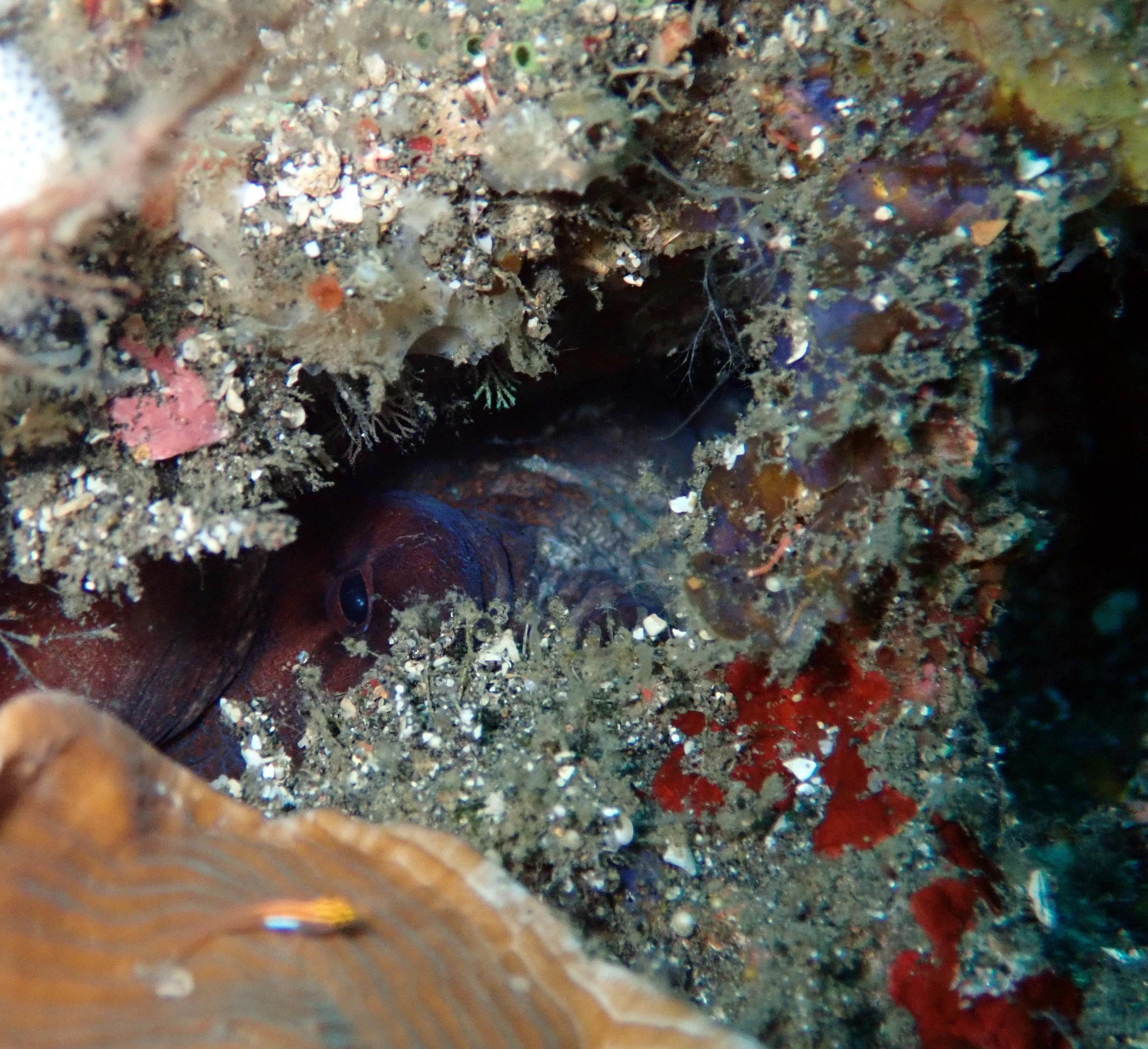 sneaky octopus.jpg