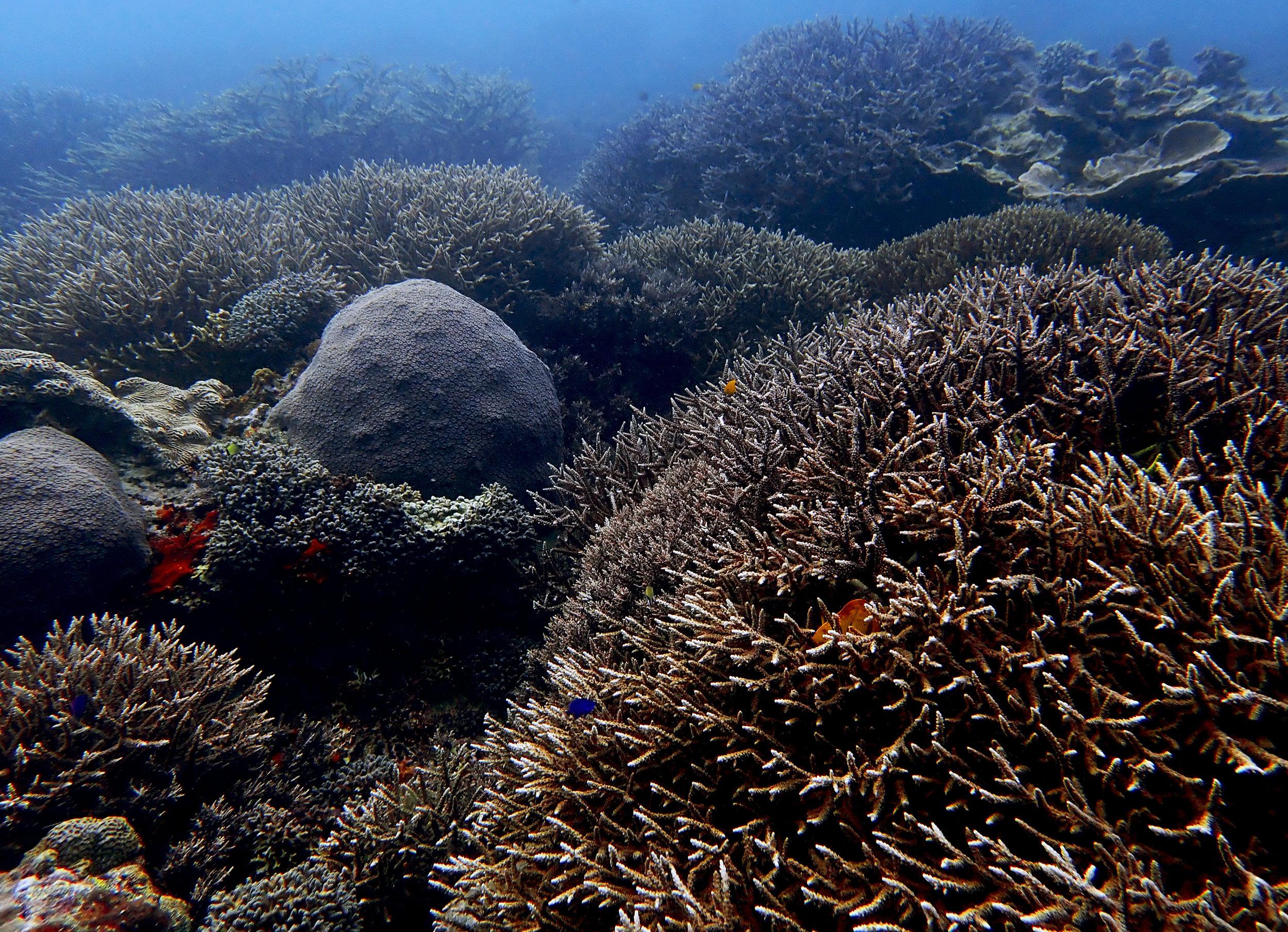 Siaba Besar coral mecca.jpg