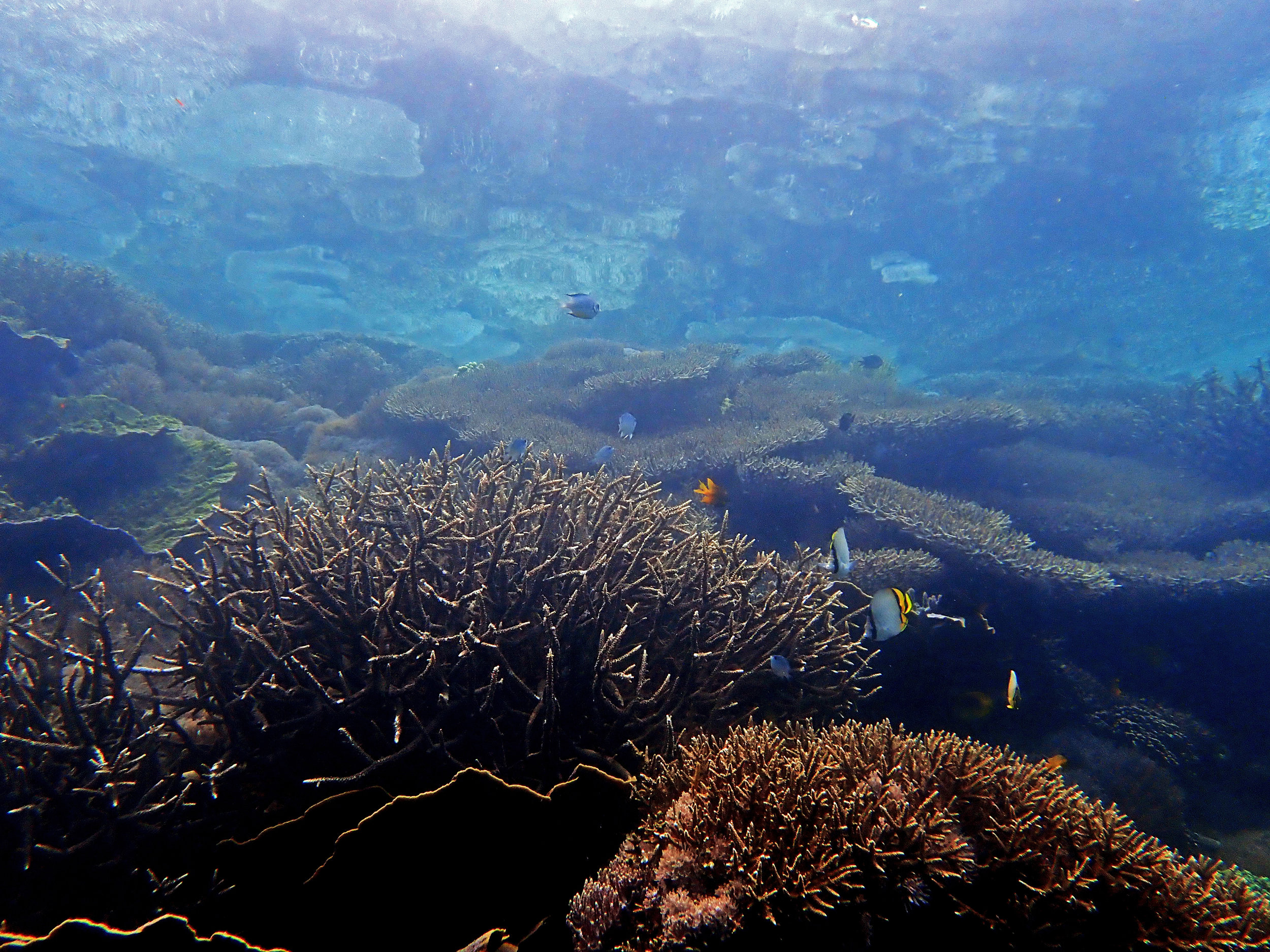 corals reflected on surface.jpg