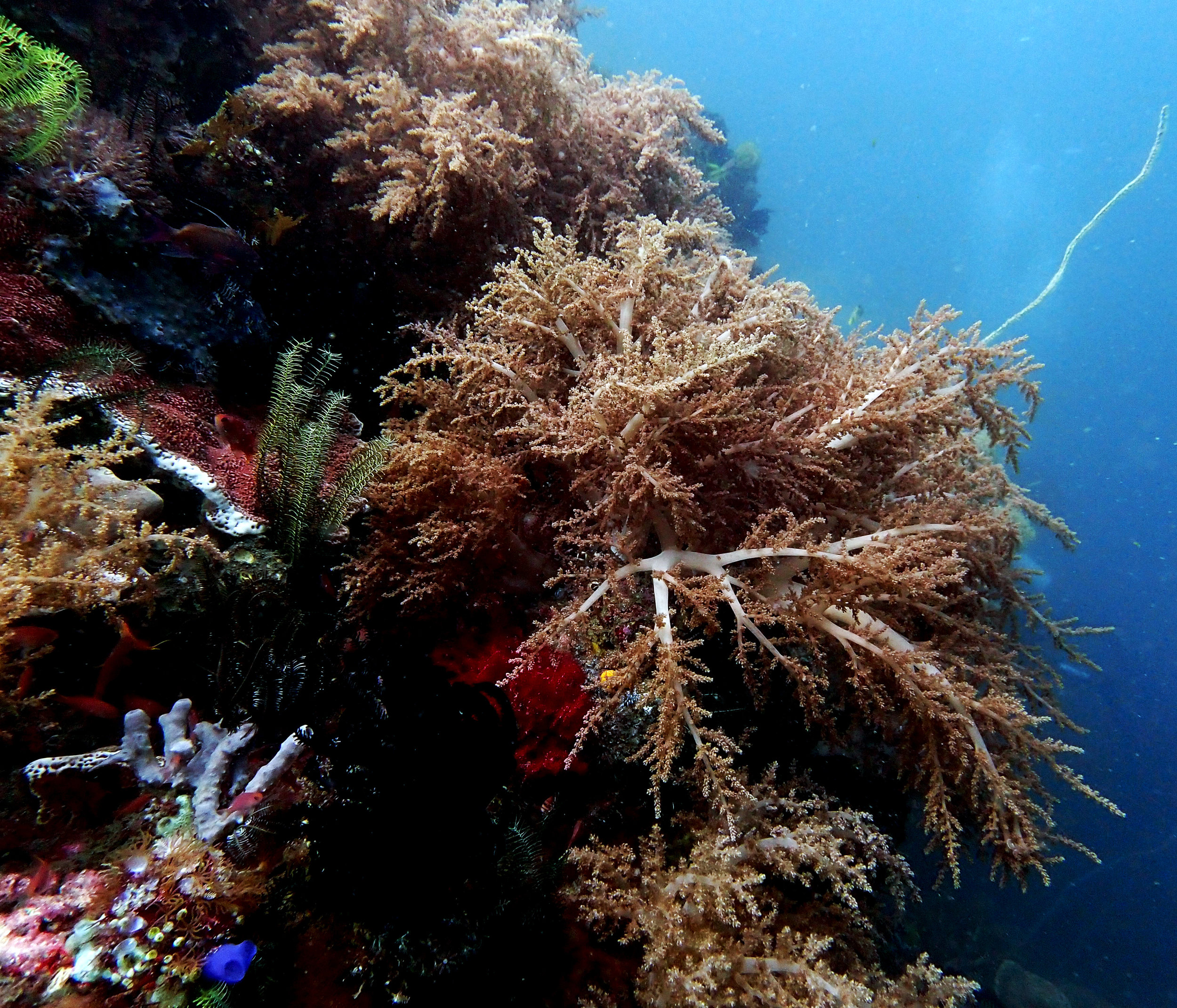 Hot Rocks soft corals.jpg