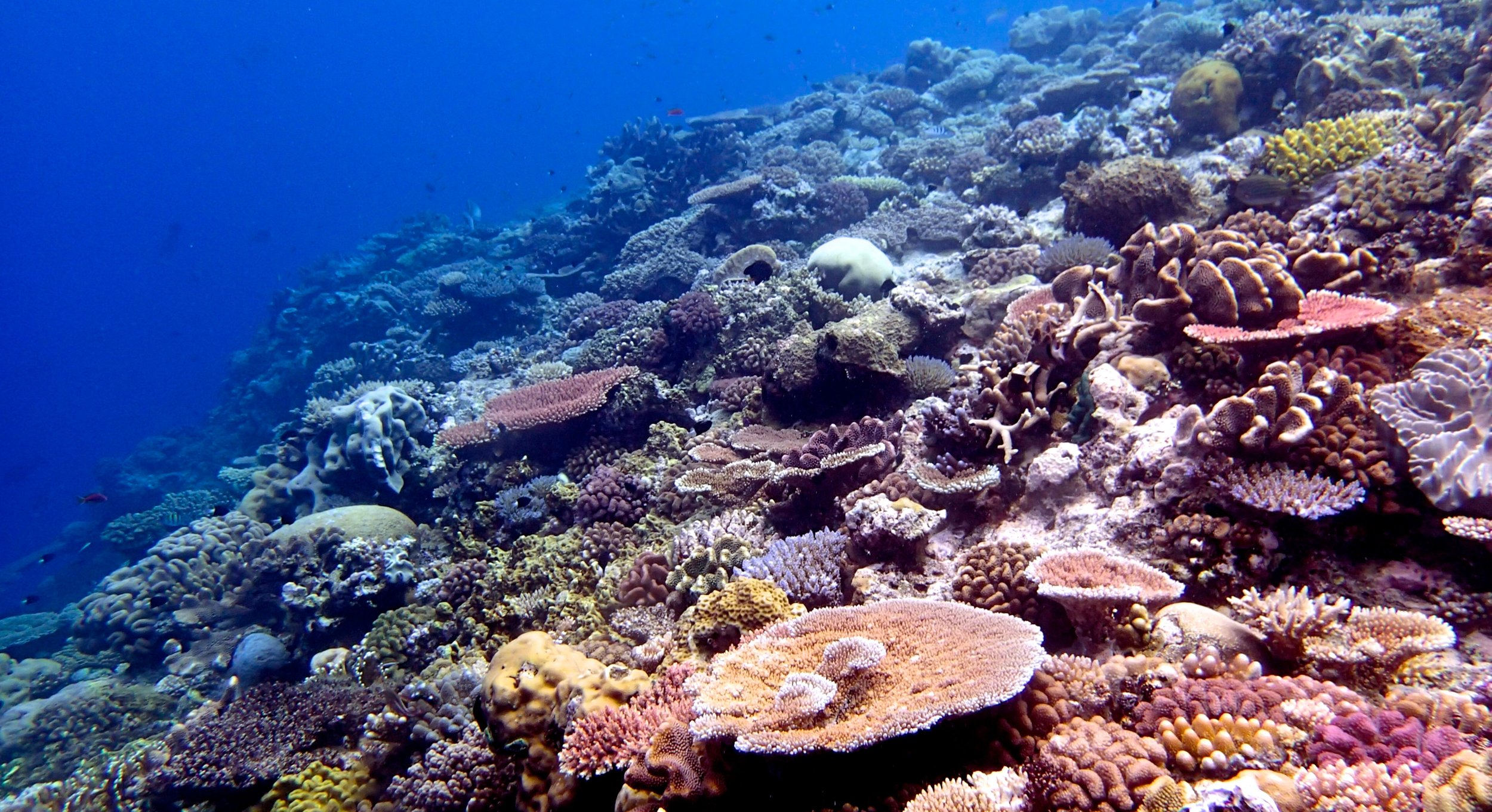 10 m at Wood Reef.jpg
