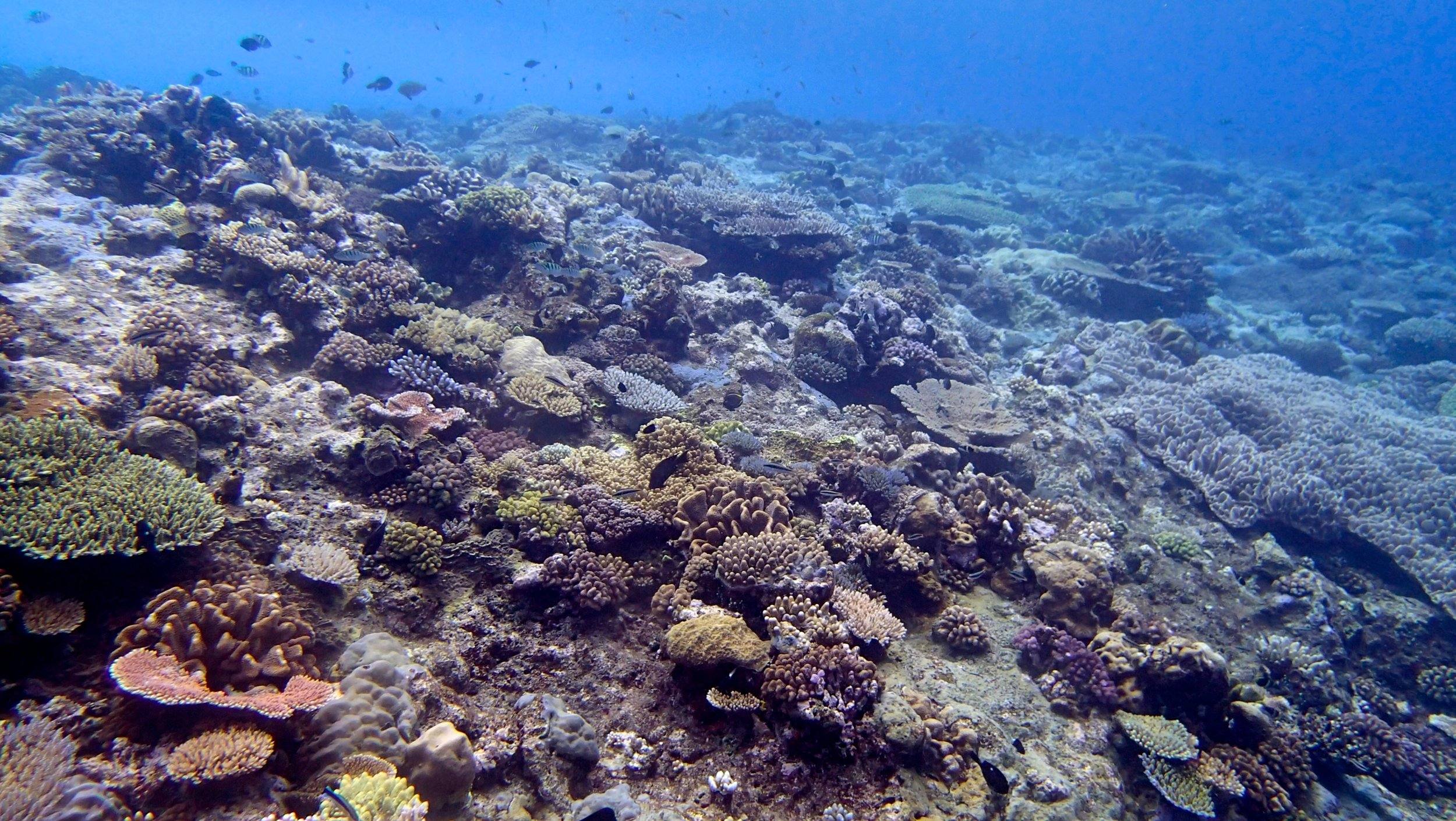 gorgeous Wood Reef.jpg