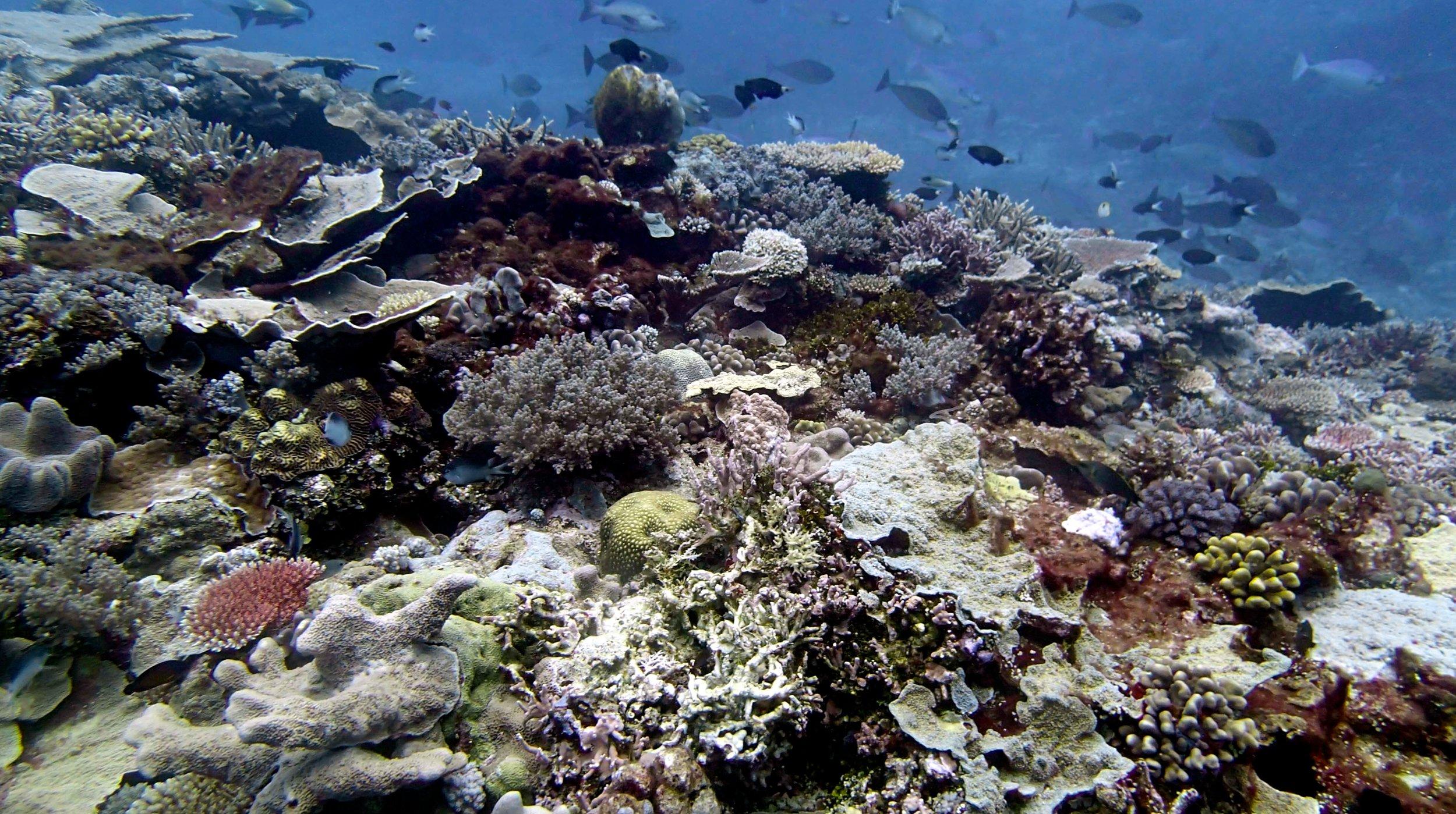 high diversity reef.jpg
