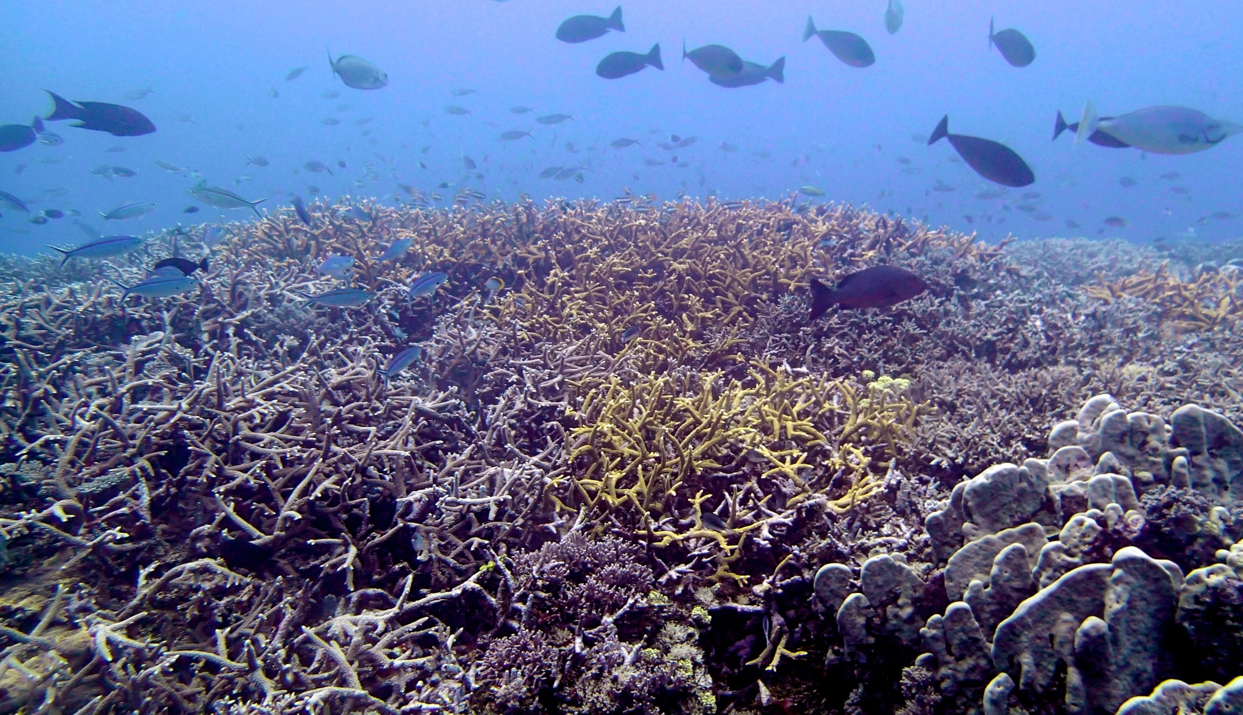 Wood Reef dive 2.jpg
