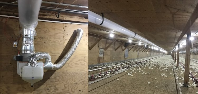 GREEN PURE AIR SYSTEM OPERATING WITHIN A CHICKEN BROILER FACILITY