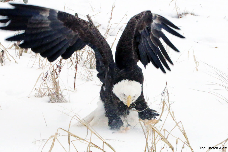 eagle1500 x 1000.jpg