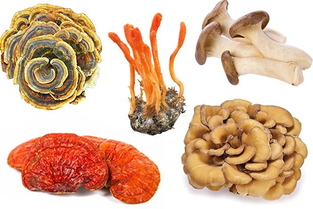 5 Mushroom Blend - 112g   Photo credit: MushroomMatrix.com
