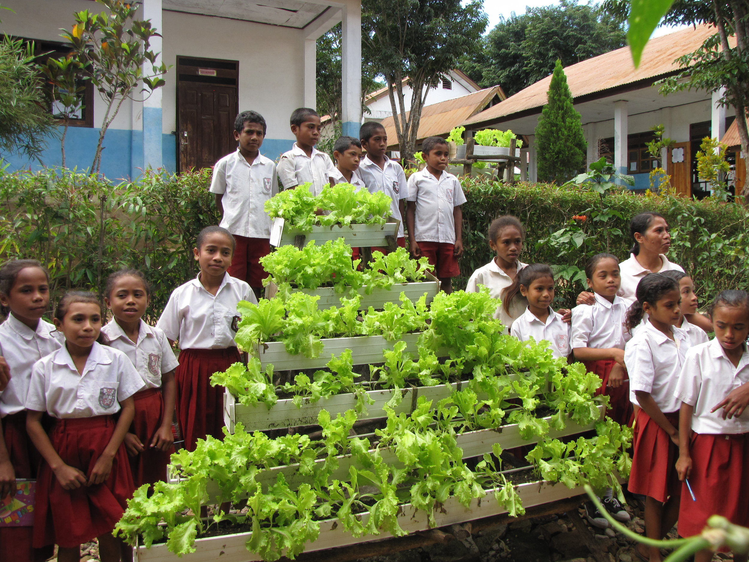 Primary school students in Timor Indonesia are growing their own vegetables for consumption and sales to continue their climate change projects in the school