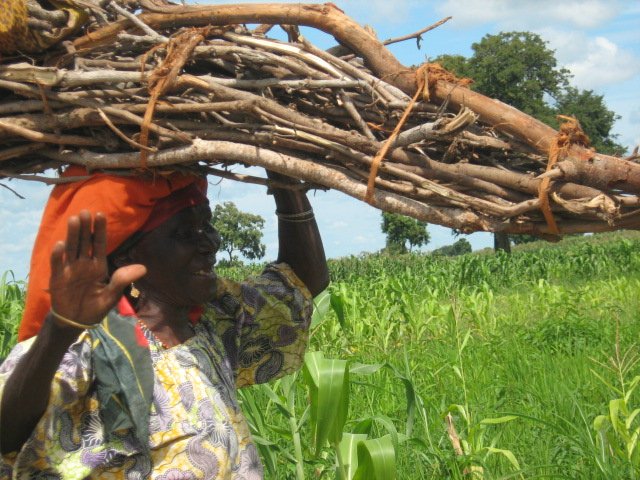 Community member collecting firewood in central Nigeria