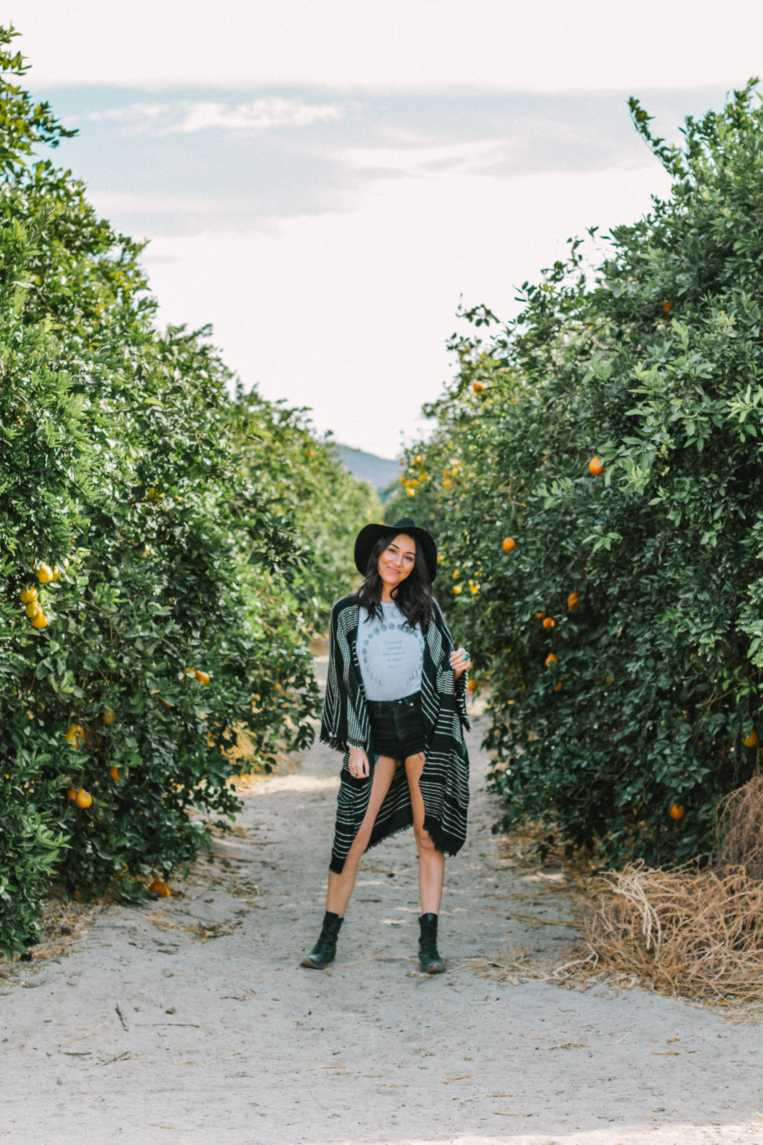 borrego springs orange orchard 4