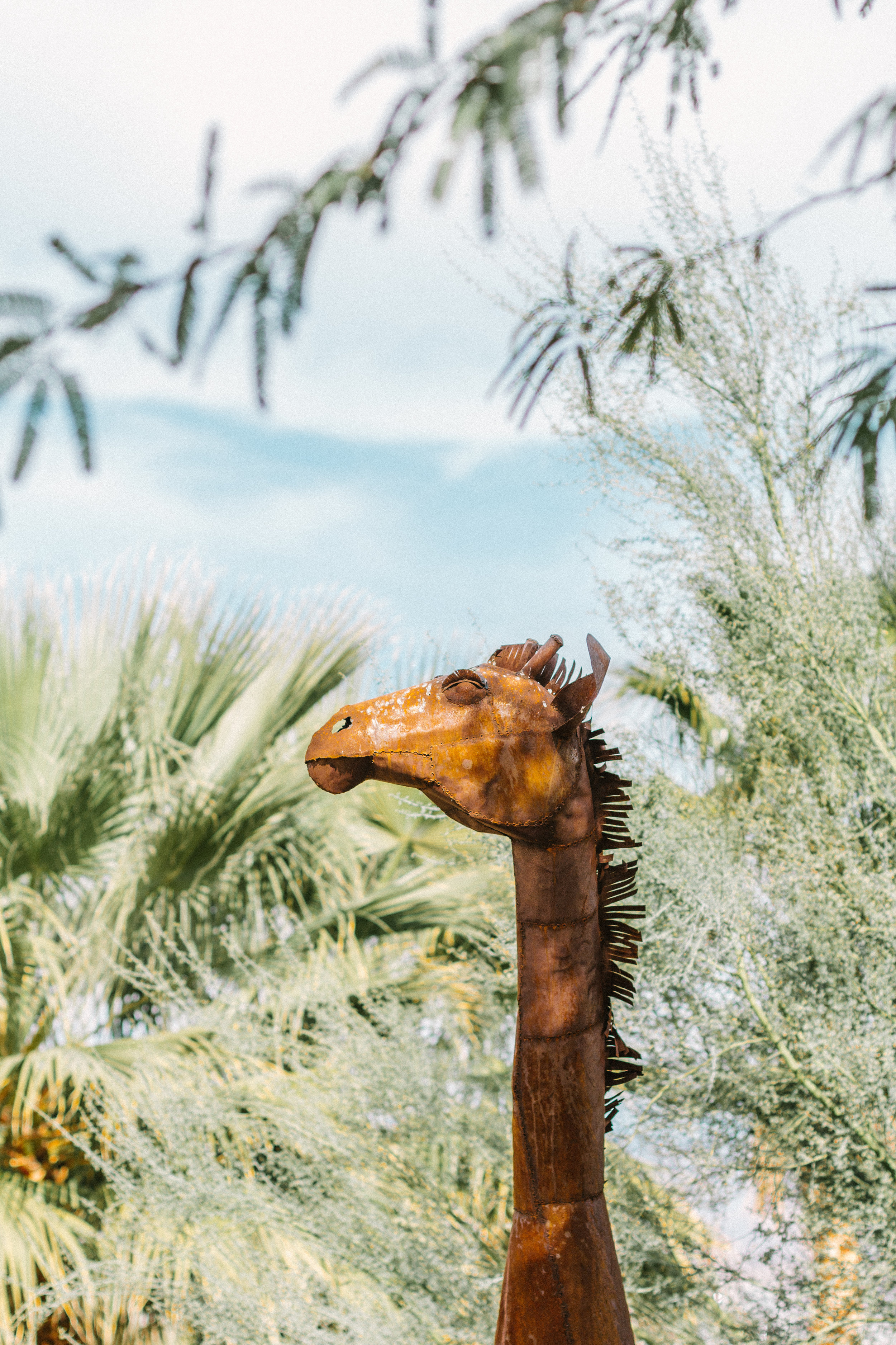 things to do borrego springs 3