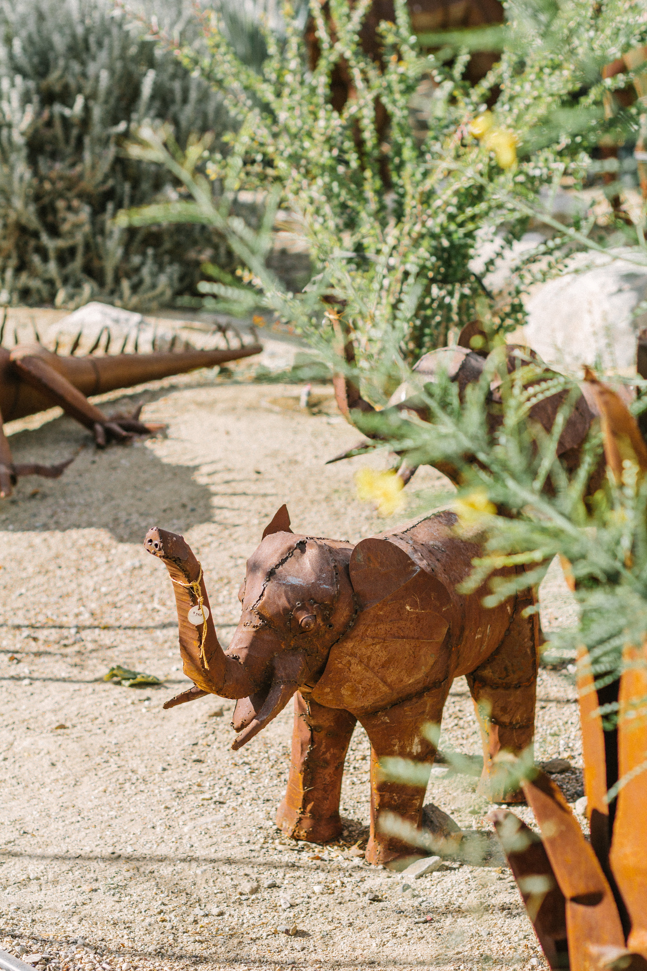 things to do borrego springs 5